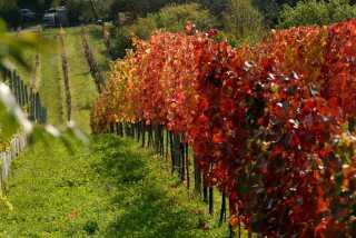 Wine Hiking Day (Weinwandertag)