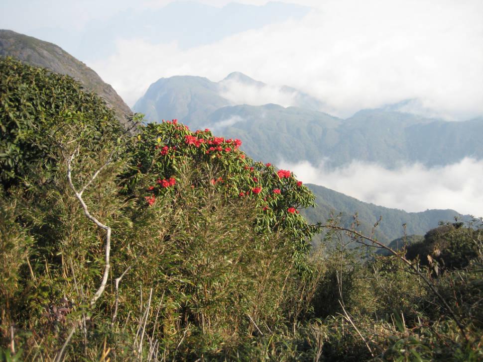 Rhododendron Blooming Season in Vietnam - Best Season