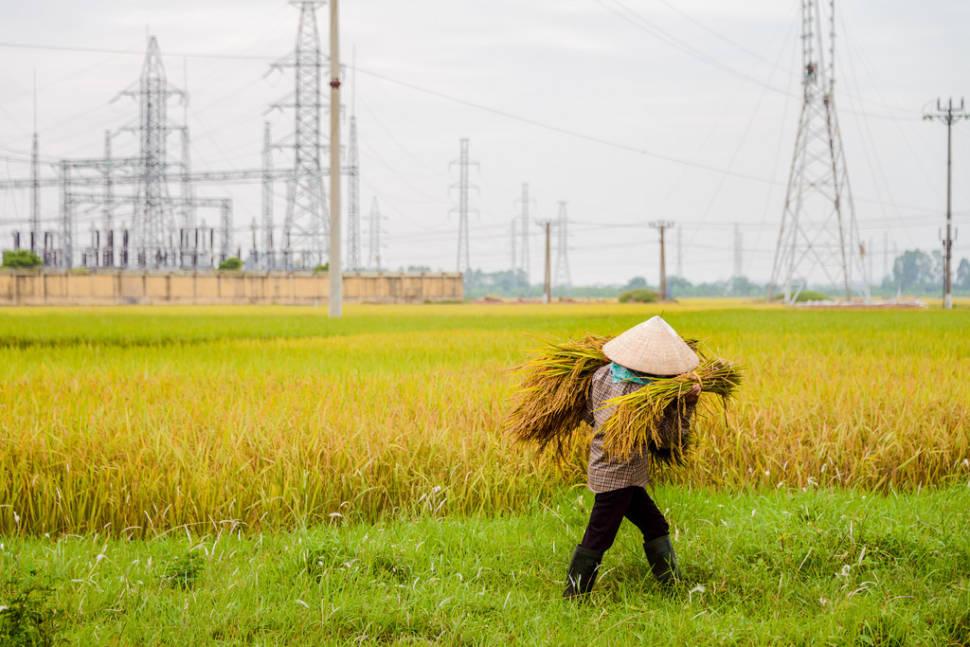 Powering Rice
