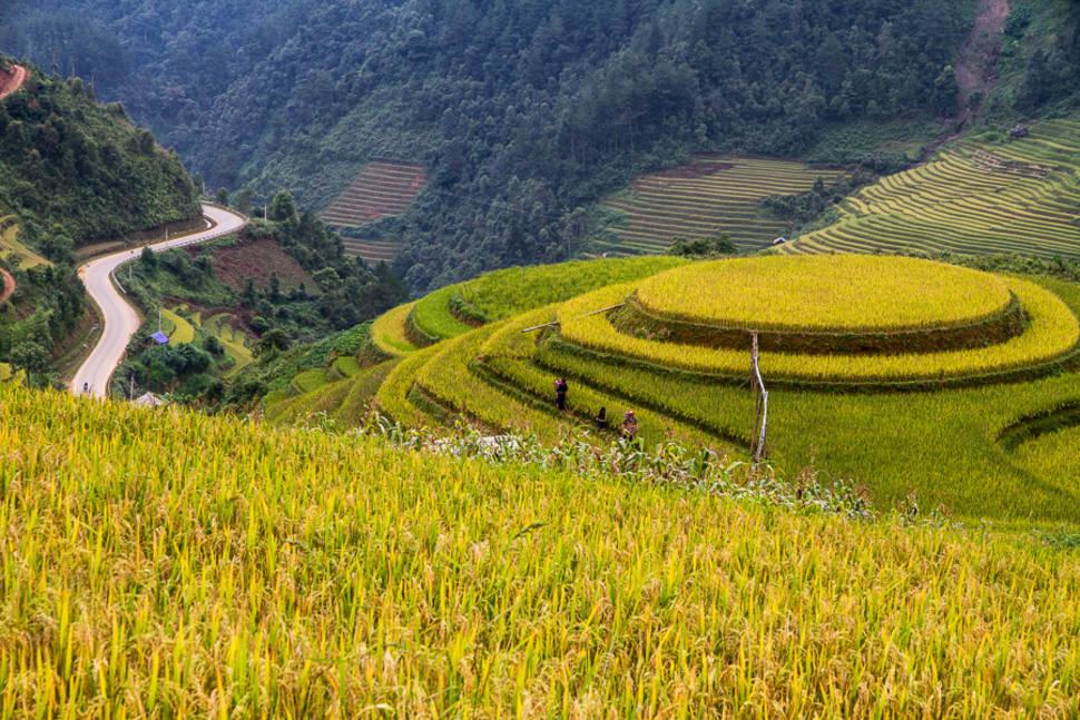Rice Terraces located in Mu Cang Chai district, Yen Bai province, Vietnam