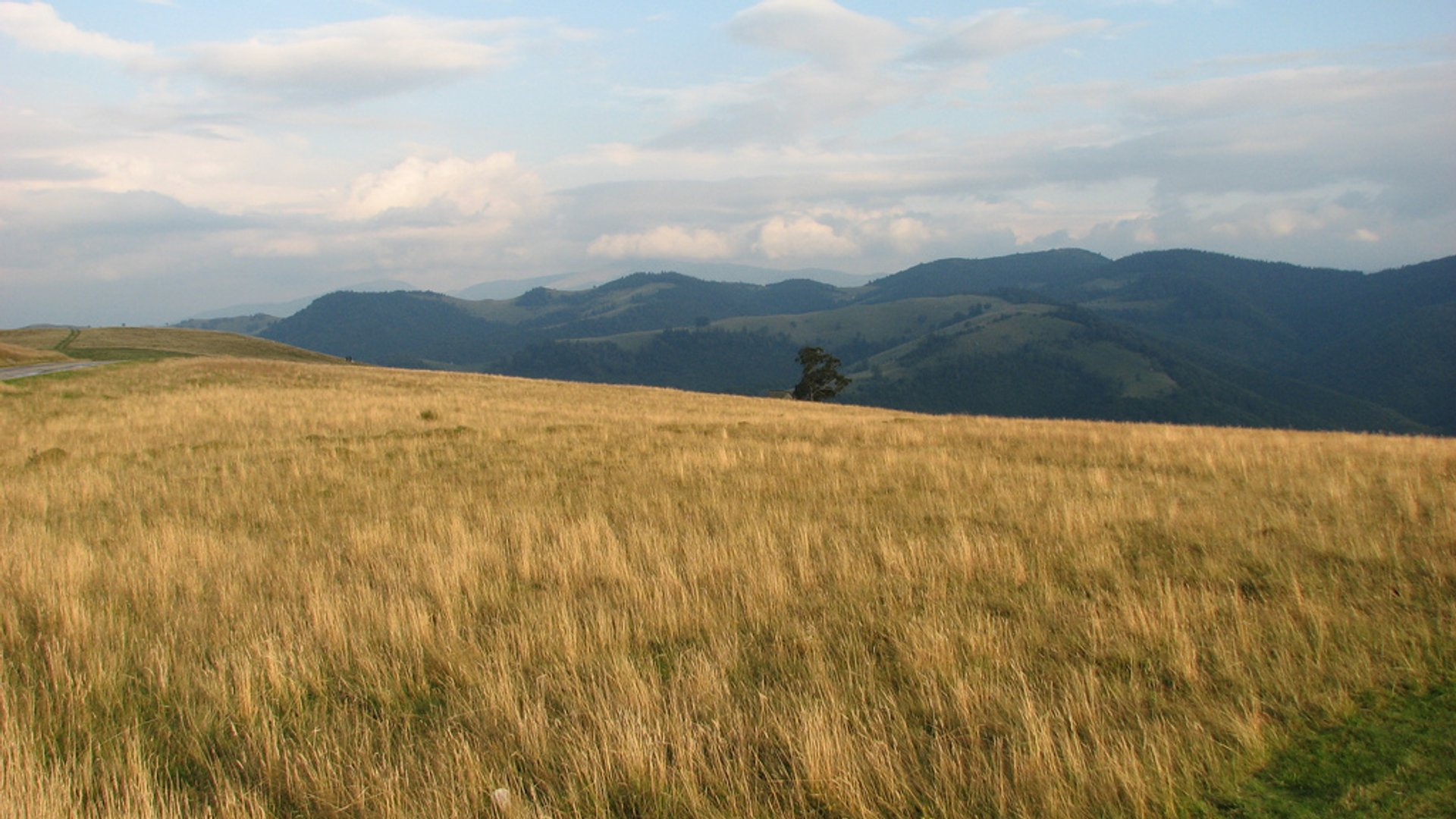 Best time for Hay Harvest in Romania 2020