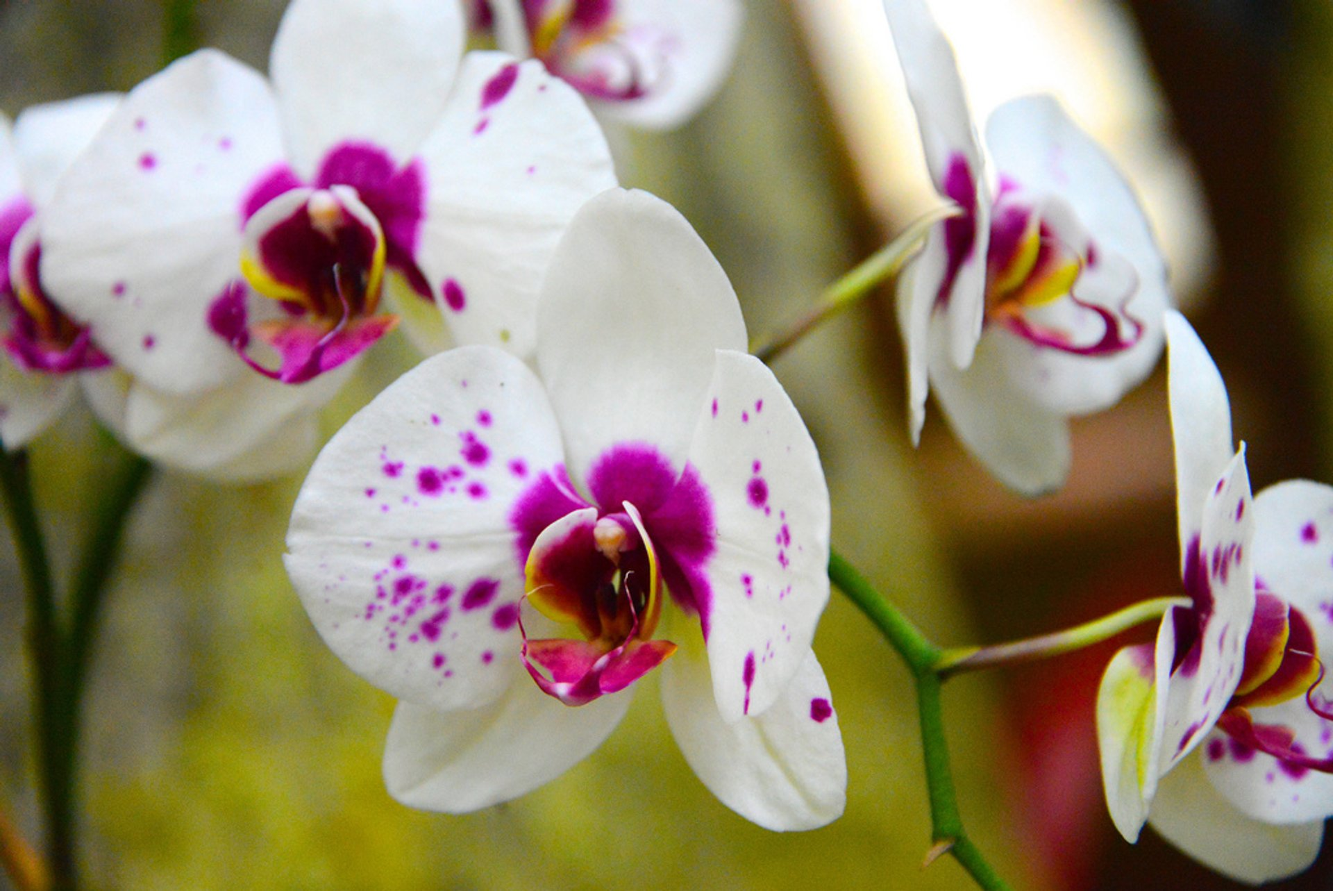 Best time for Orchids in Costa Rica 2020