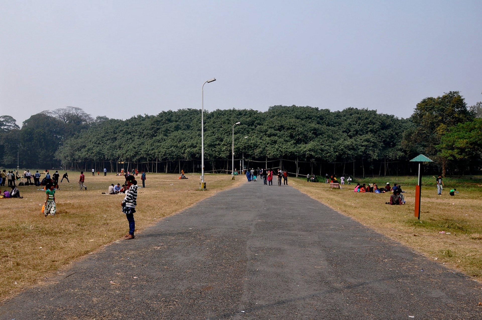 Great Banyan Tree in India - Best Season 2020