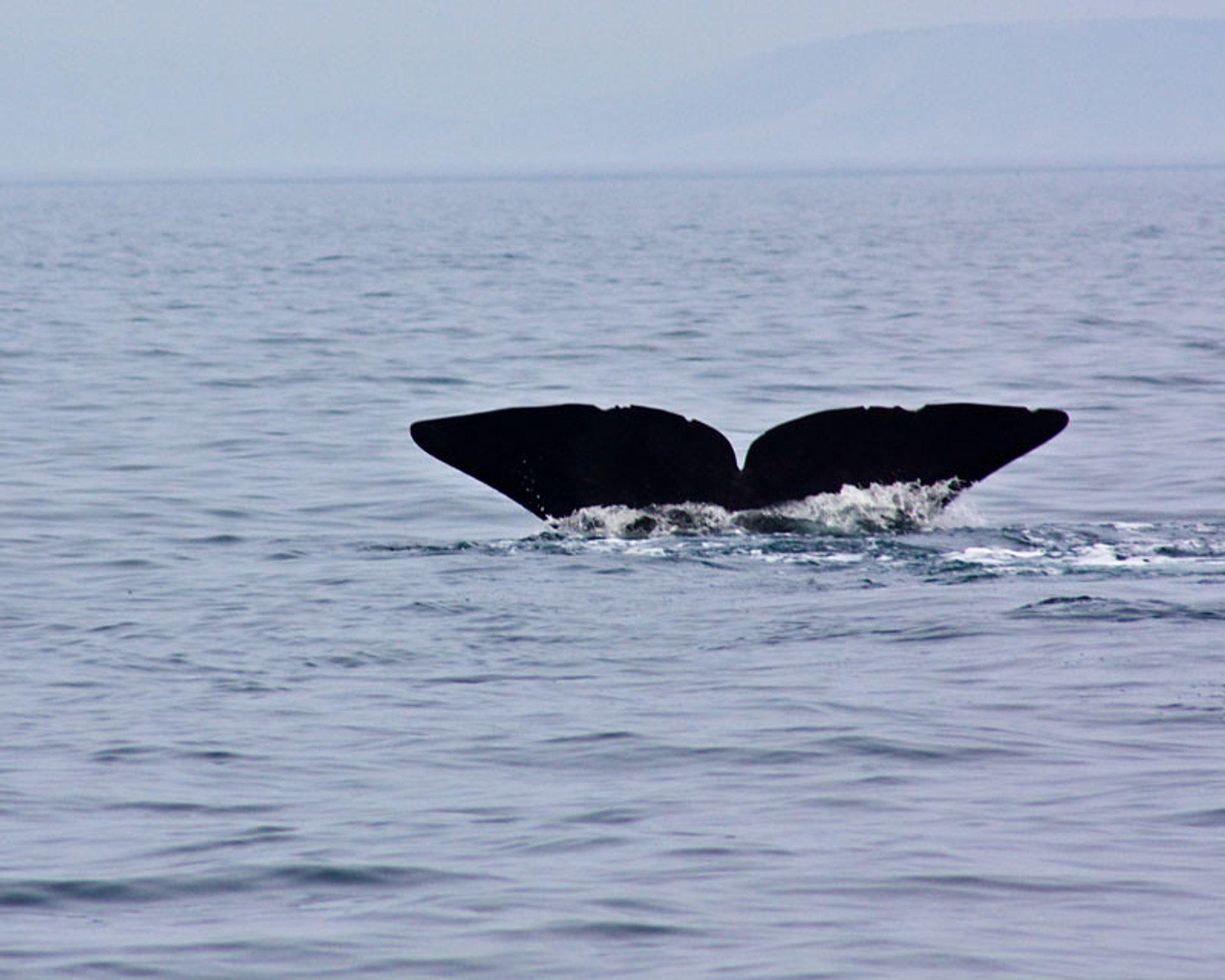 Whale watching in Rausu, Hokkaido 2020