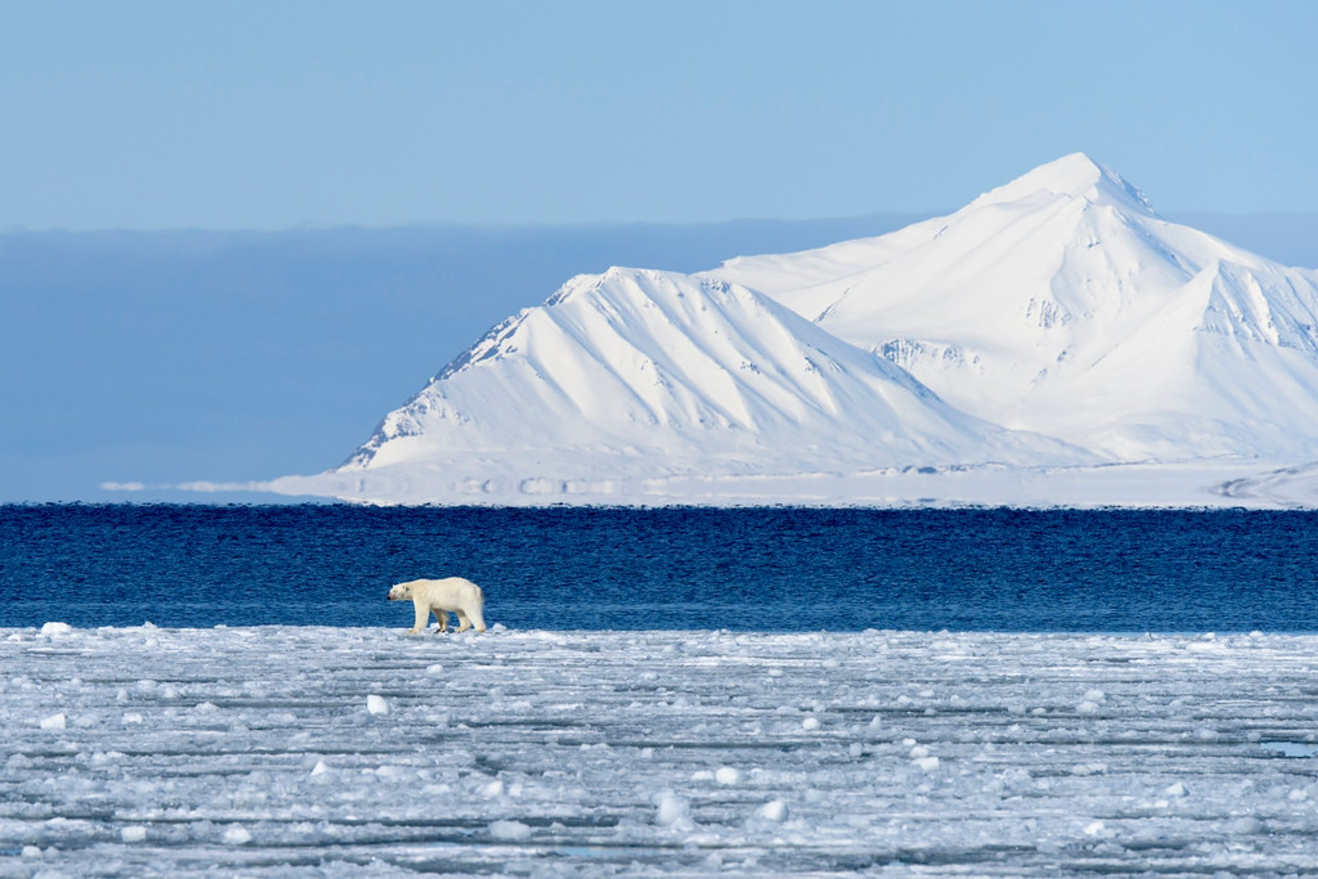 Best time for Polar Bear Watching in Svalbard 2019