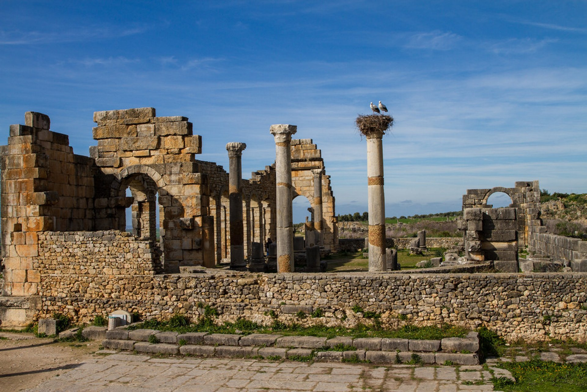 Best time for Storks of Volubilis in Morocco 2019