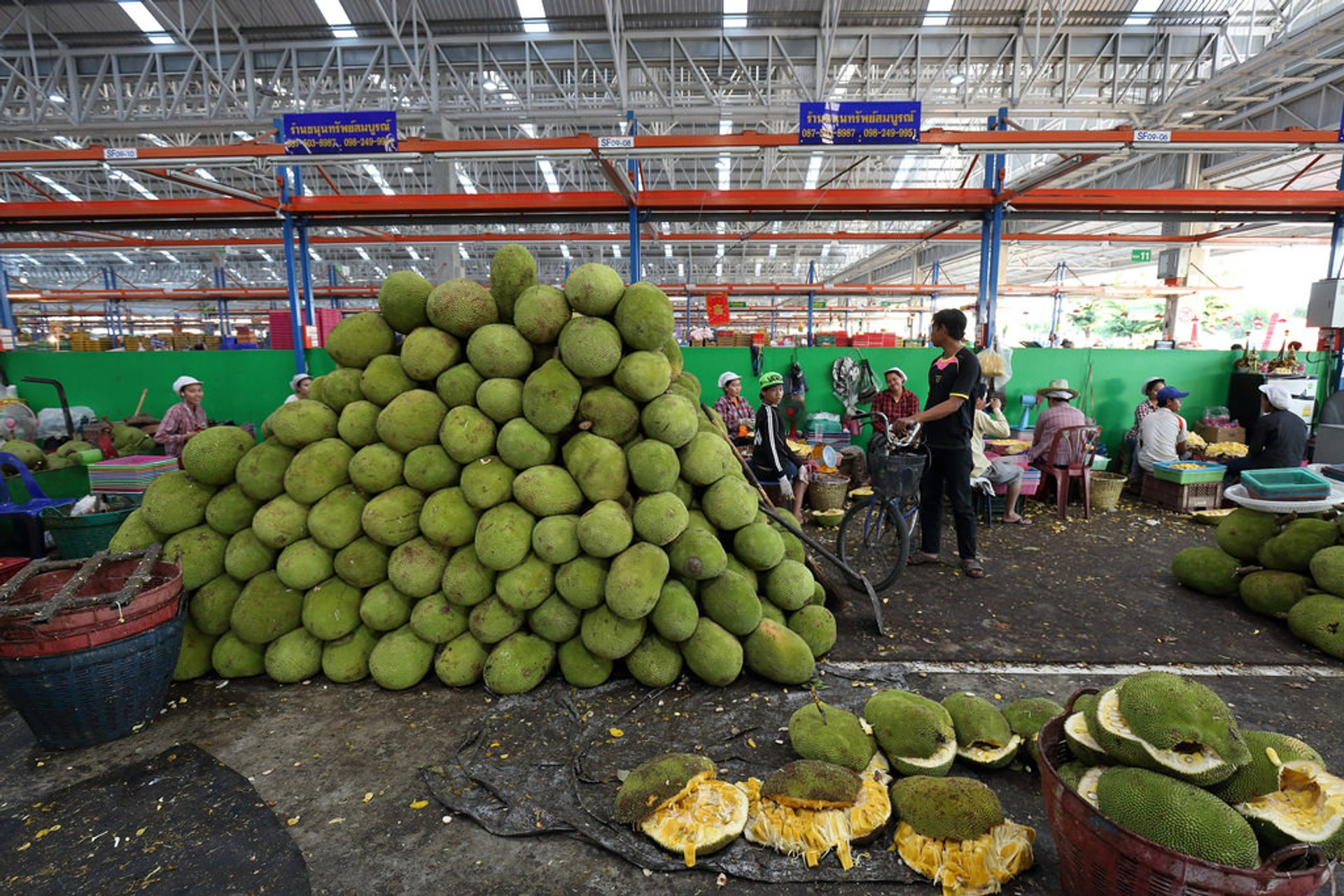 Jackfruit Season in Thailand 2019 - Best Time