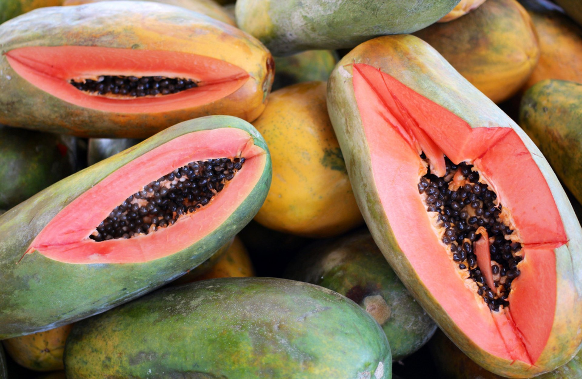 Papaya in Costa Rica 2019 - Best Time