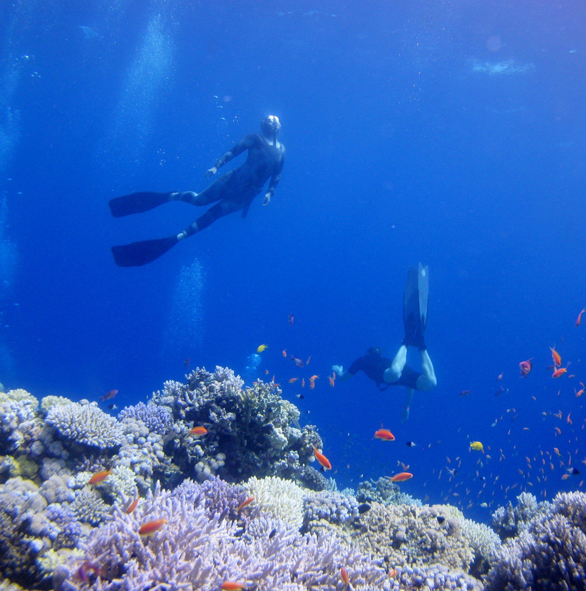 Corals of the Dahab Blue Hole 2020