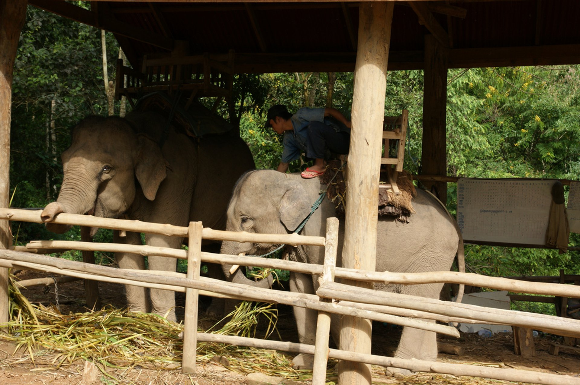 Caring for an Elephant in Laos - Best Season 2019