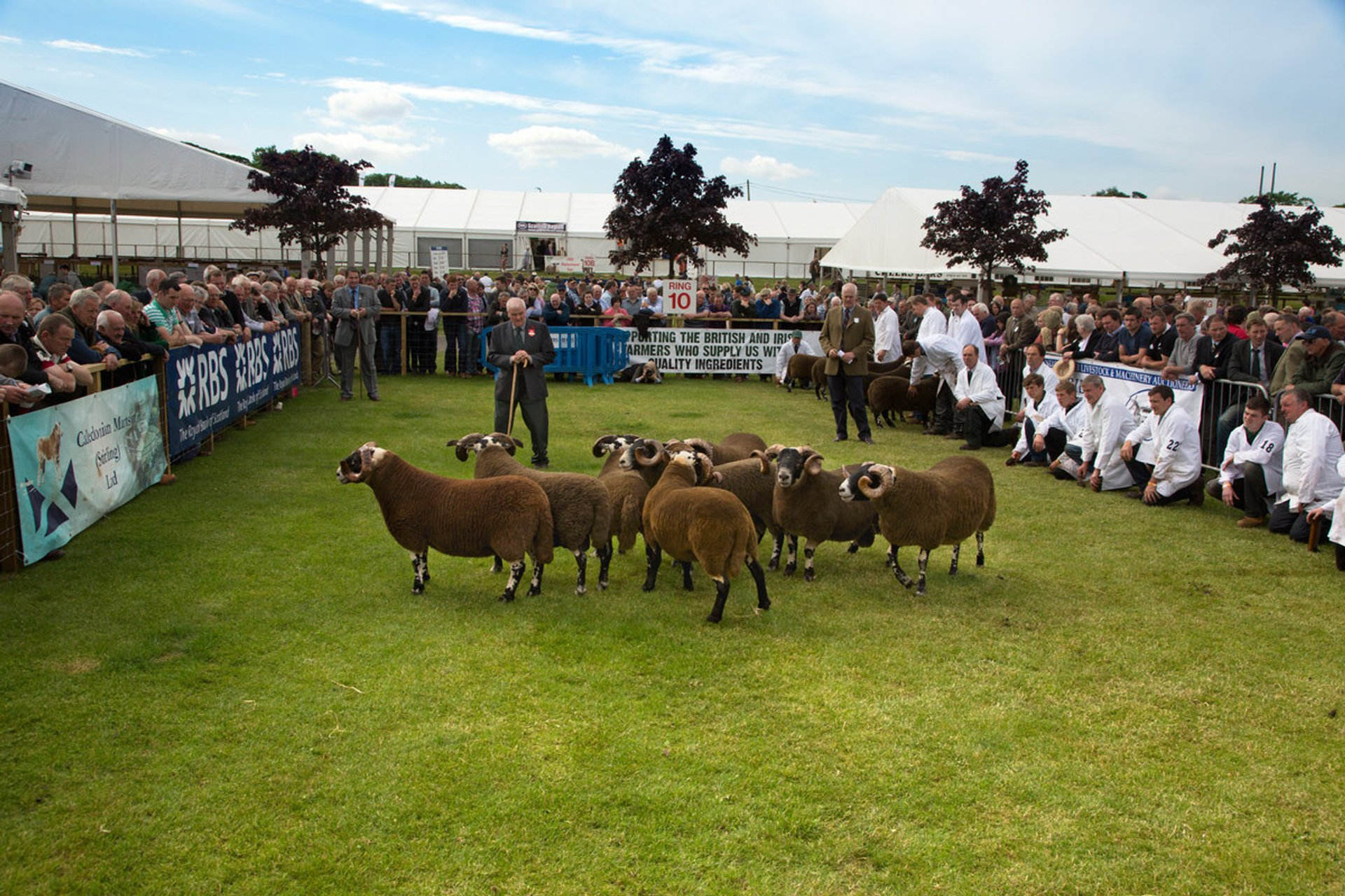 Best time to see Royal Highland Show in Scotland 2020