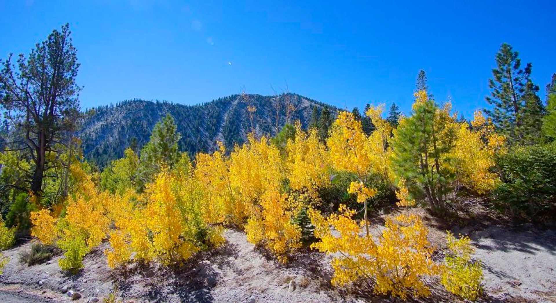 Fall colors on MT Rose, North Lake Tahoe 2020