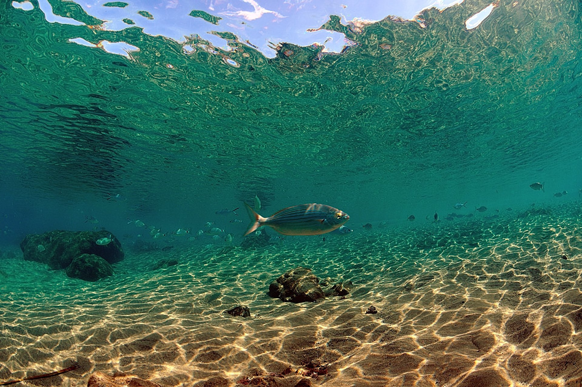 Diving and Snorkelling​ in Canary Islands - Best Season