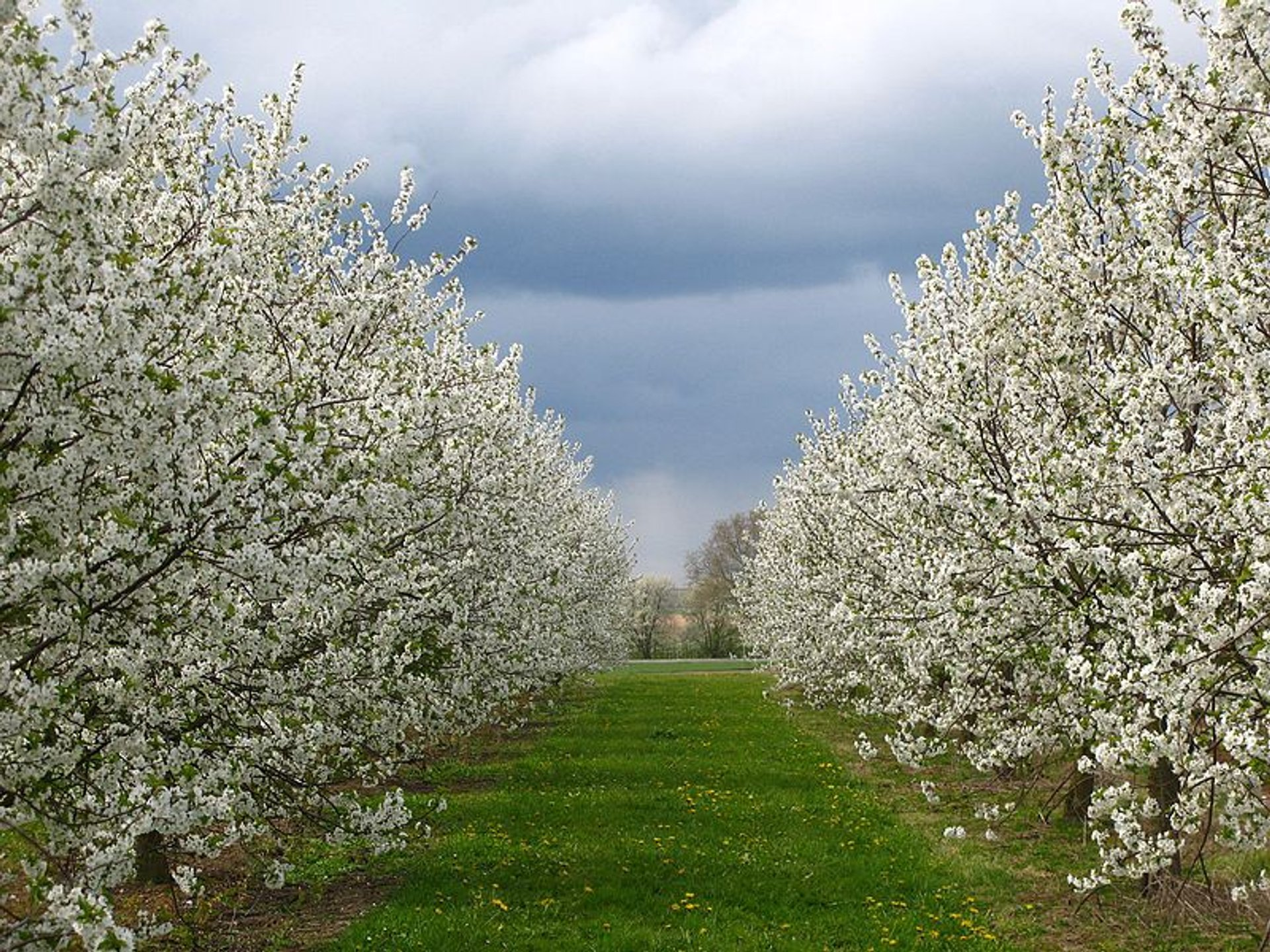 Best time to see Blossom Season in Haspengouw in Belgium 2020