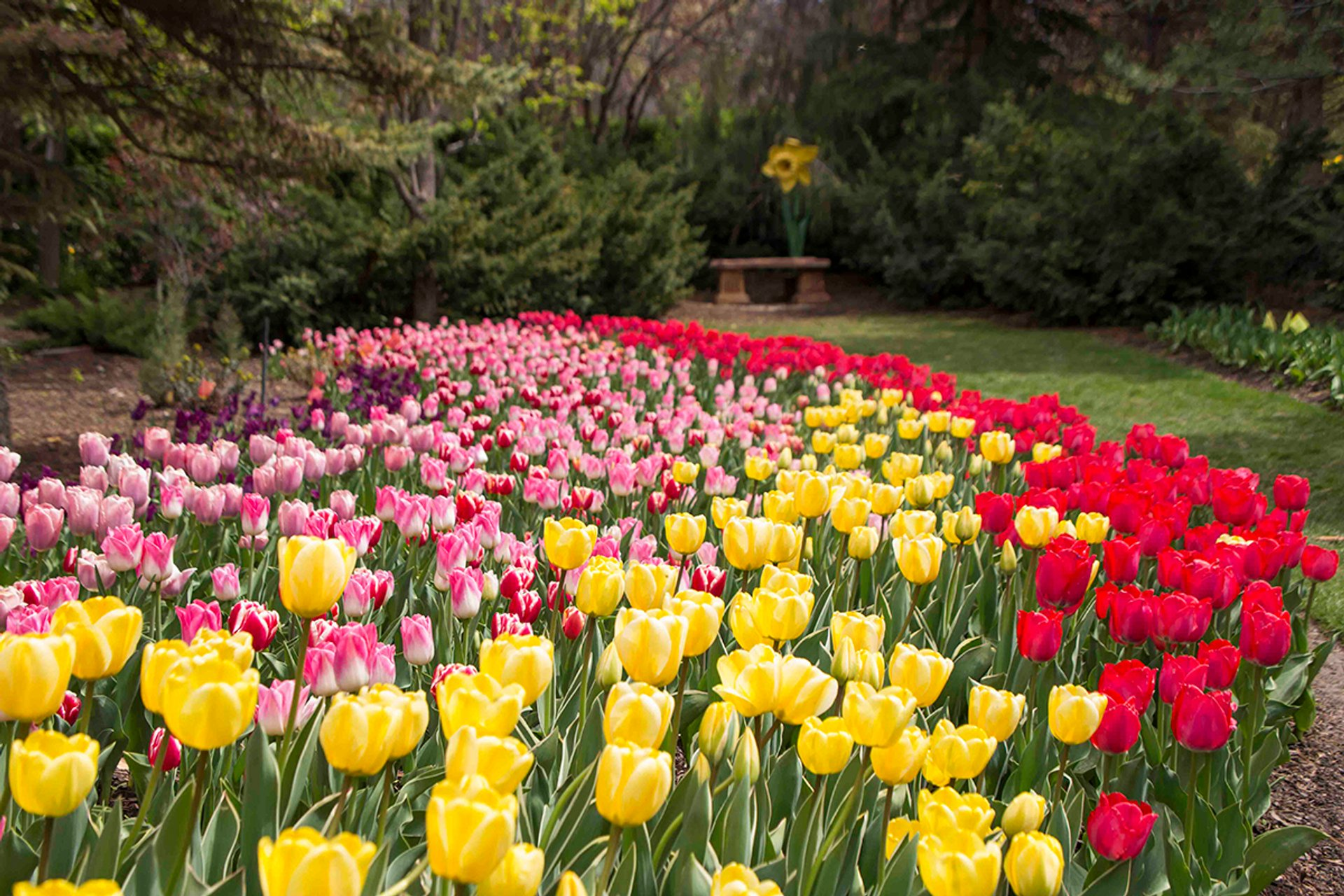 Tulip Festival at Thanksgiving Point in Utah - Best Season