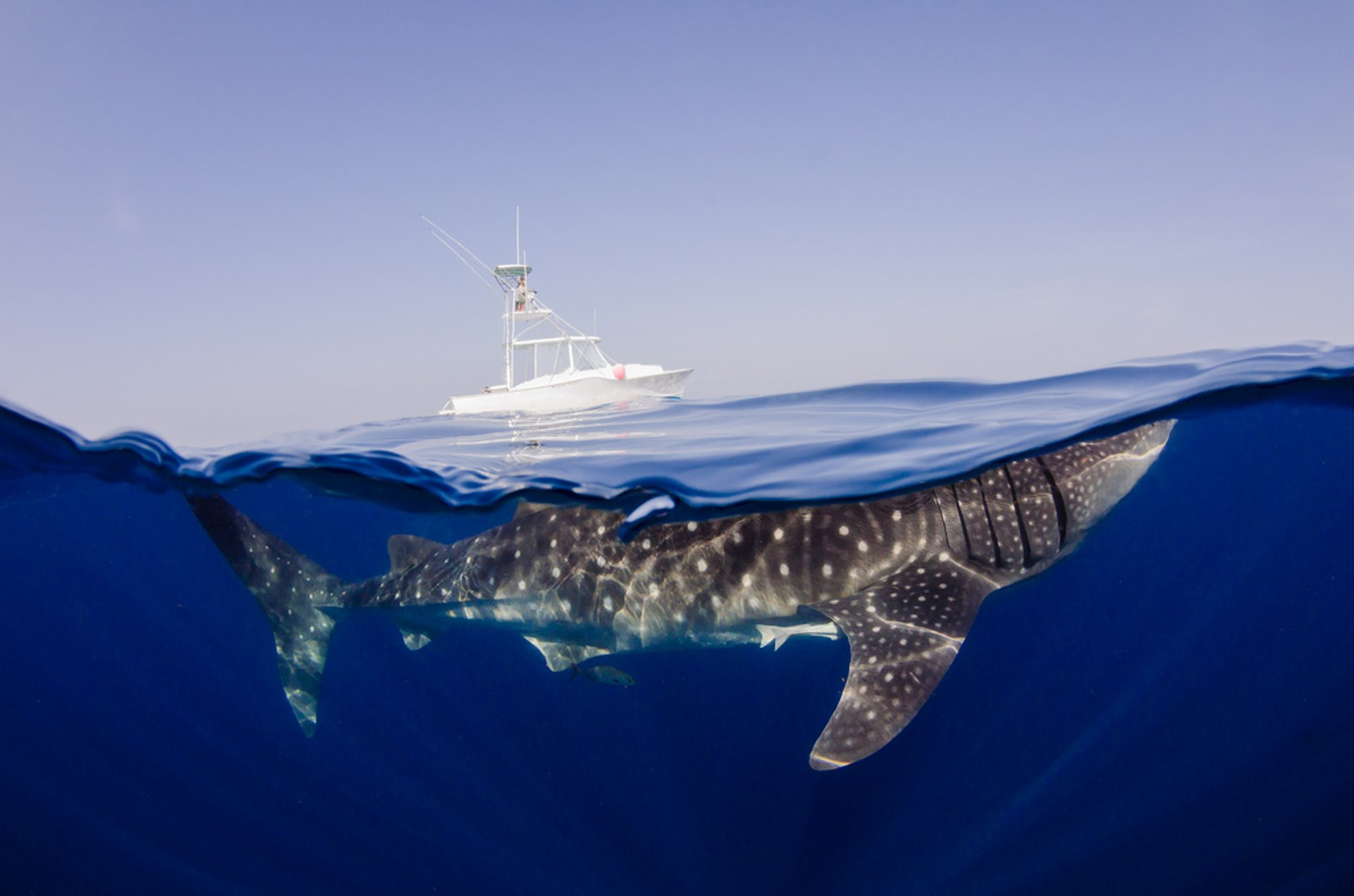 Swimming with Whale Sharks in Cancun - Best Season 2020