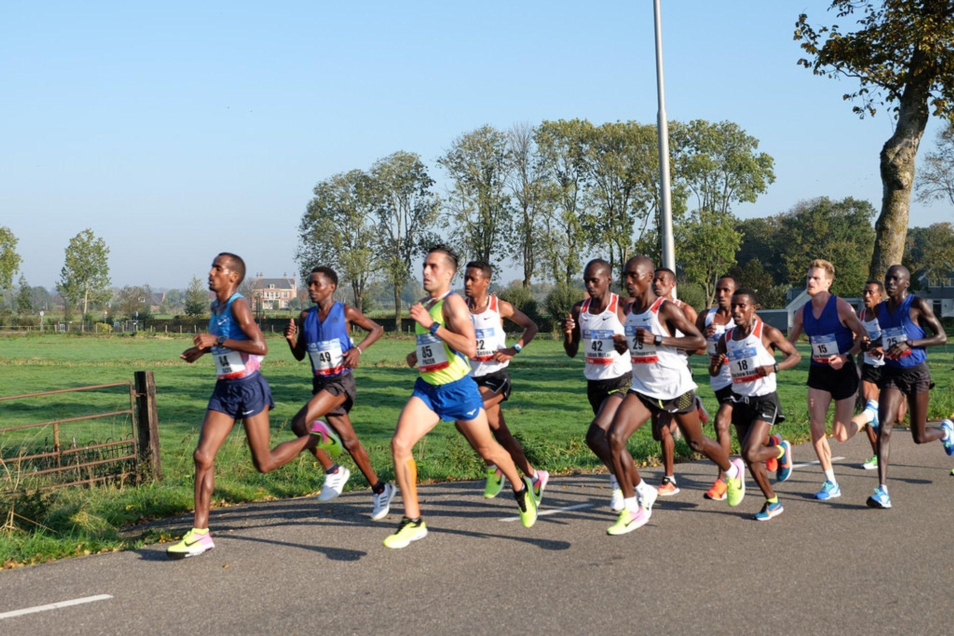 TCS Amsterdam Marathon in Amsterdam - Best Season