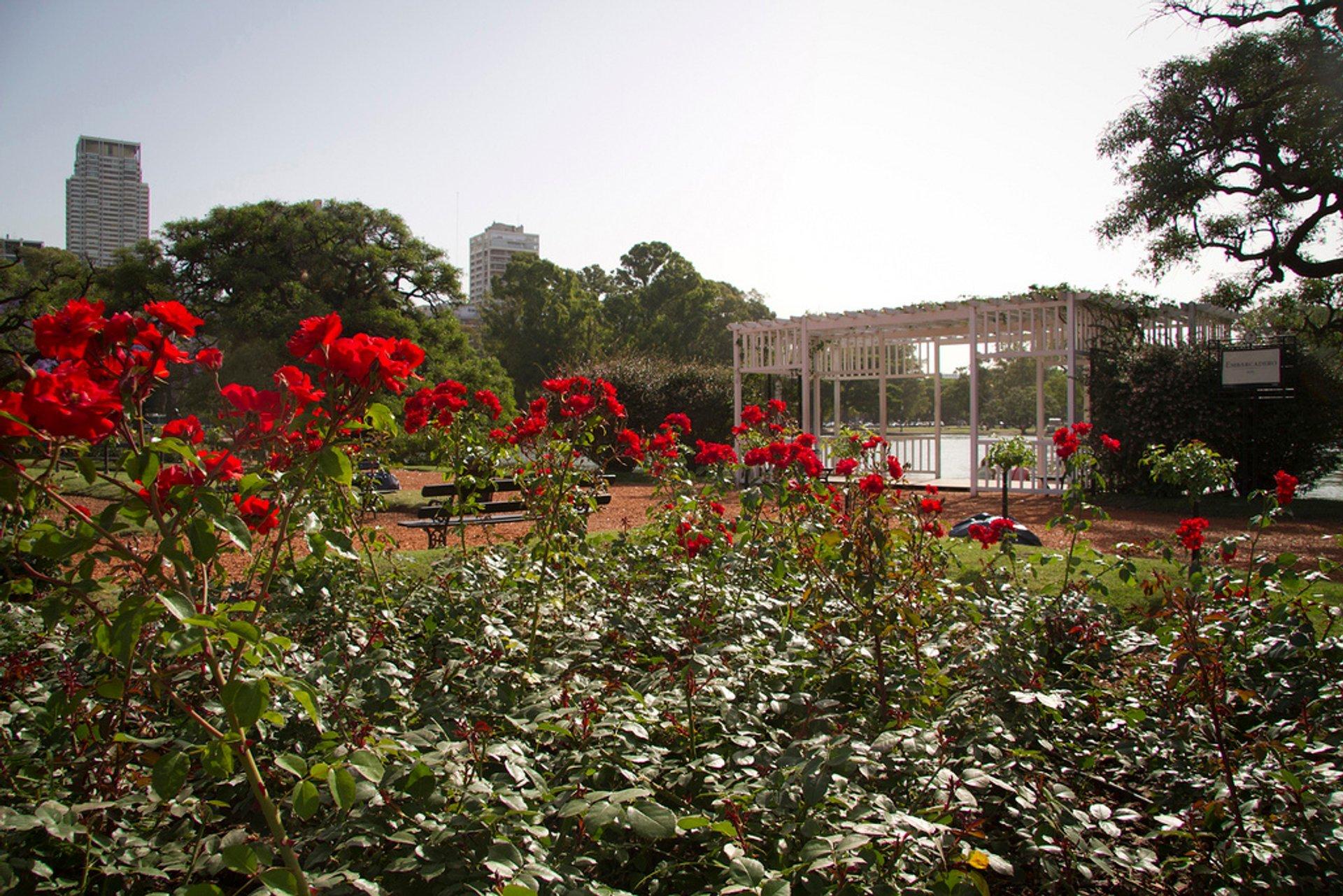 Rosedal de Buenos Aires 2020