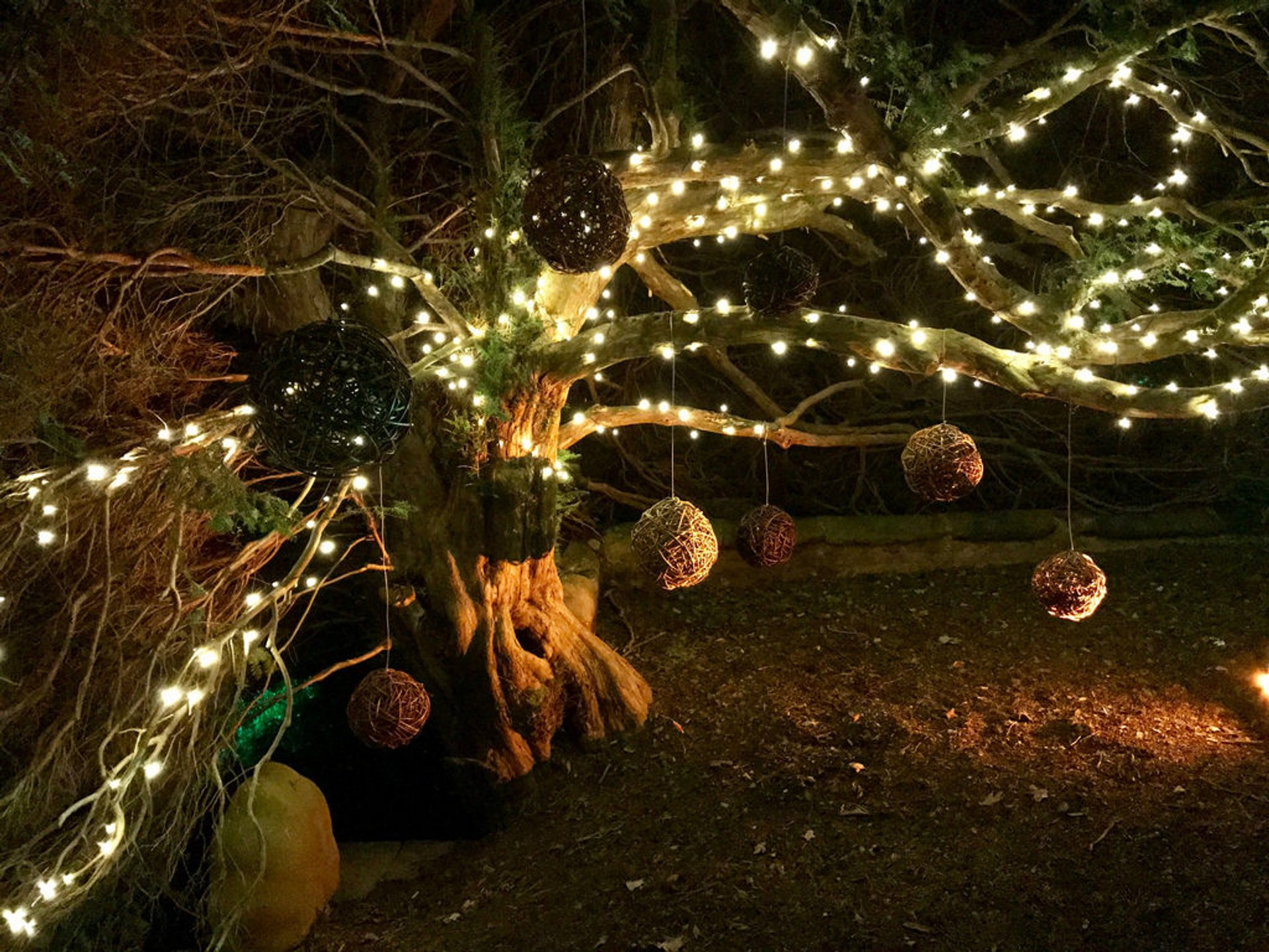 Best time to see Christmas at Powis Castle in Wales 2019