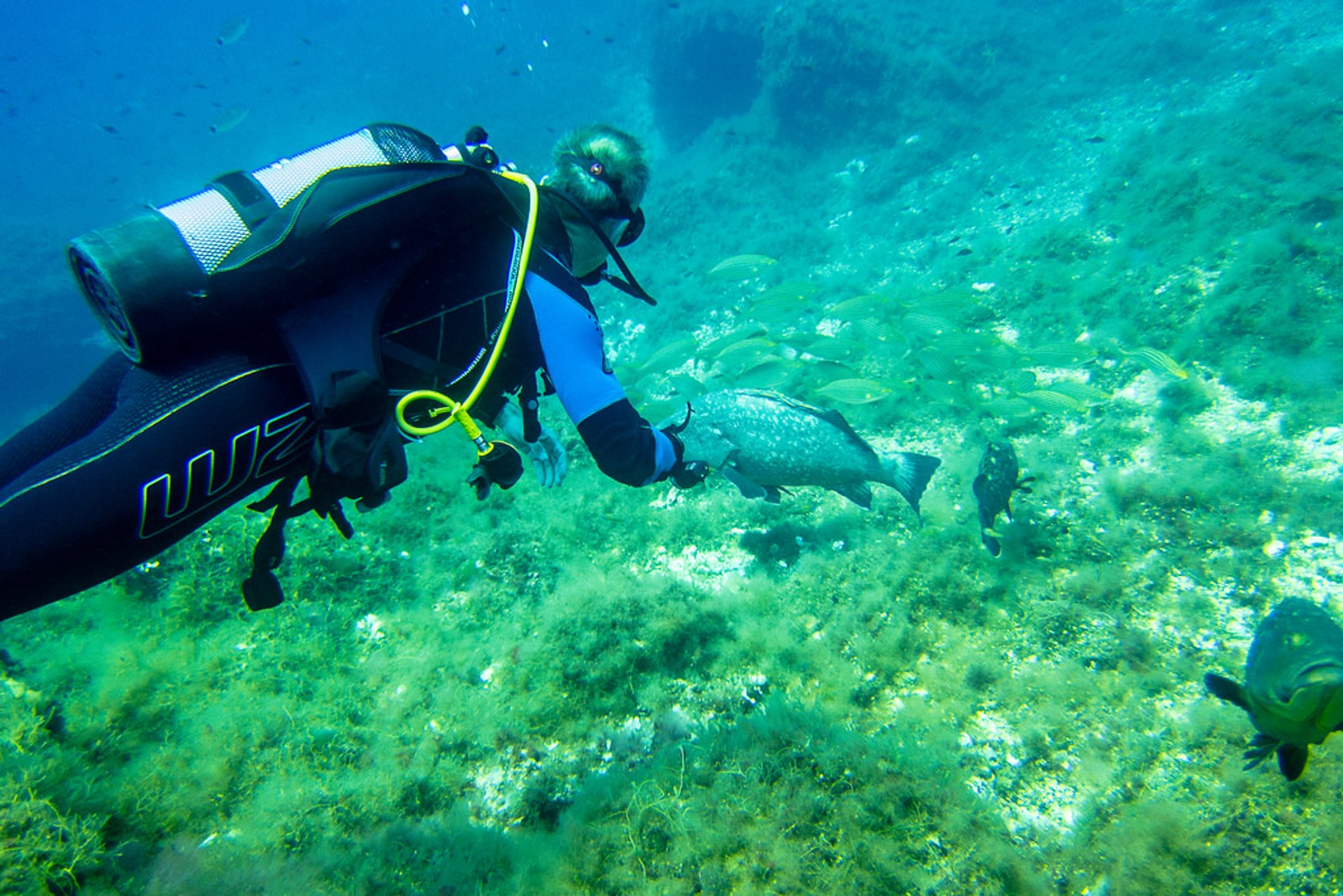 Scuba Diving in Mallorca in Mallorca 2020 - Best Time