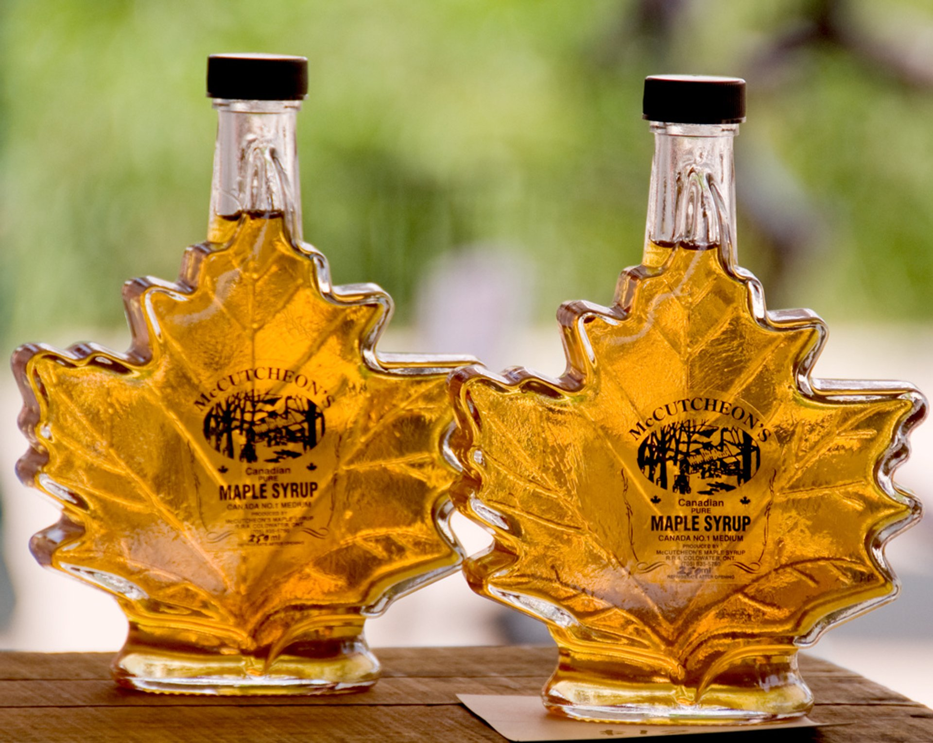 Fresh Maple Syrup in Toronto 2019 - Best Time