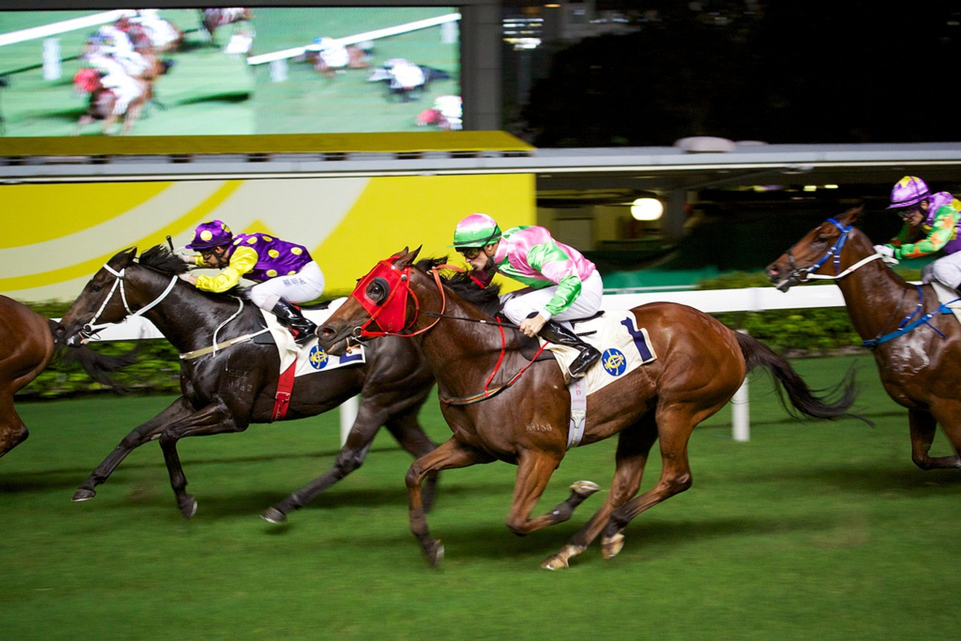 Horse Racing in Hong Kong 2020 - Best Time