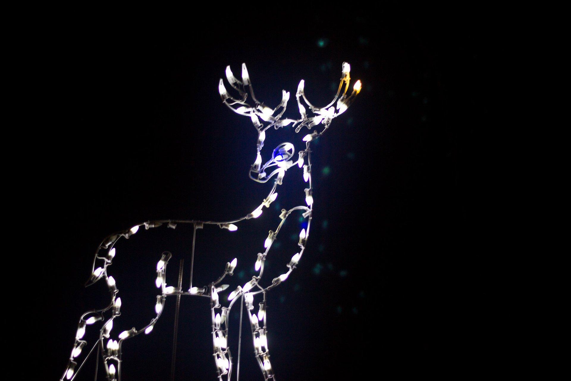 Christmas at Noccalula Falls, Gadsden 2020