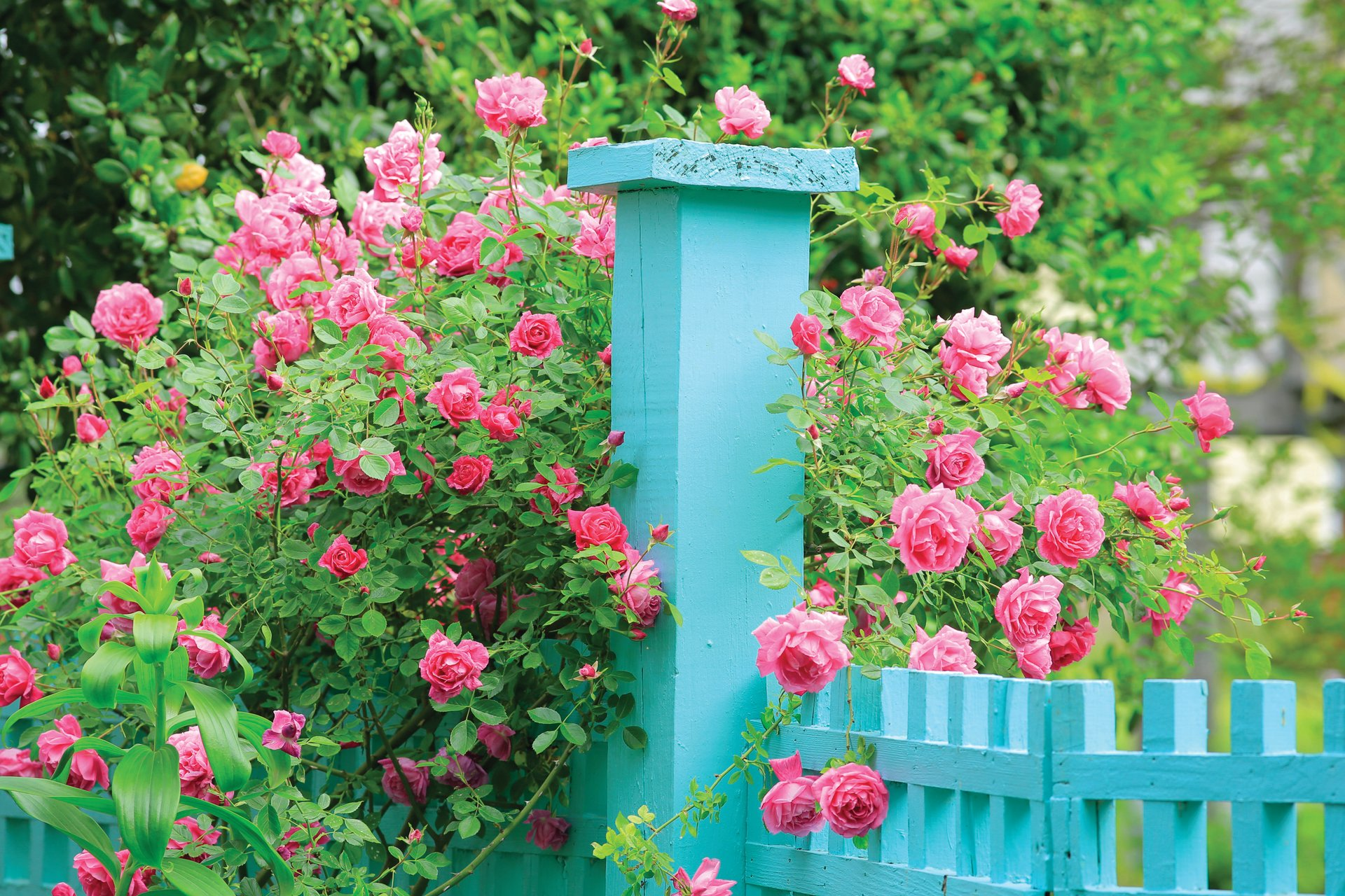 Historic Garden Week in Virginia 2020 - Best Time