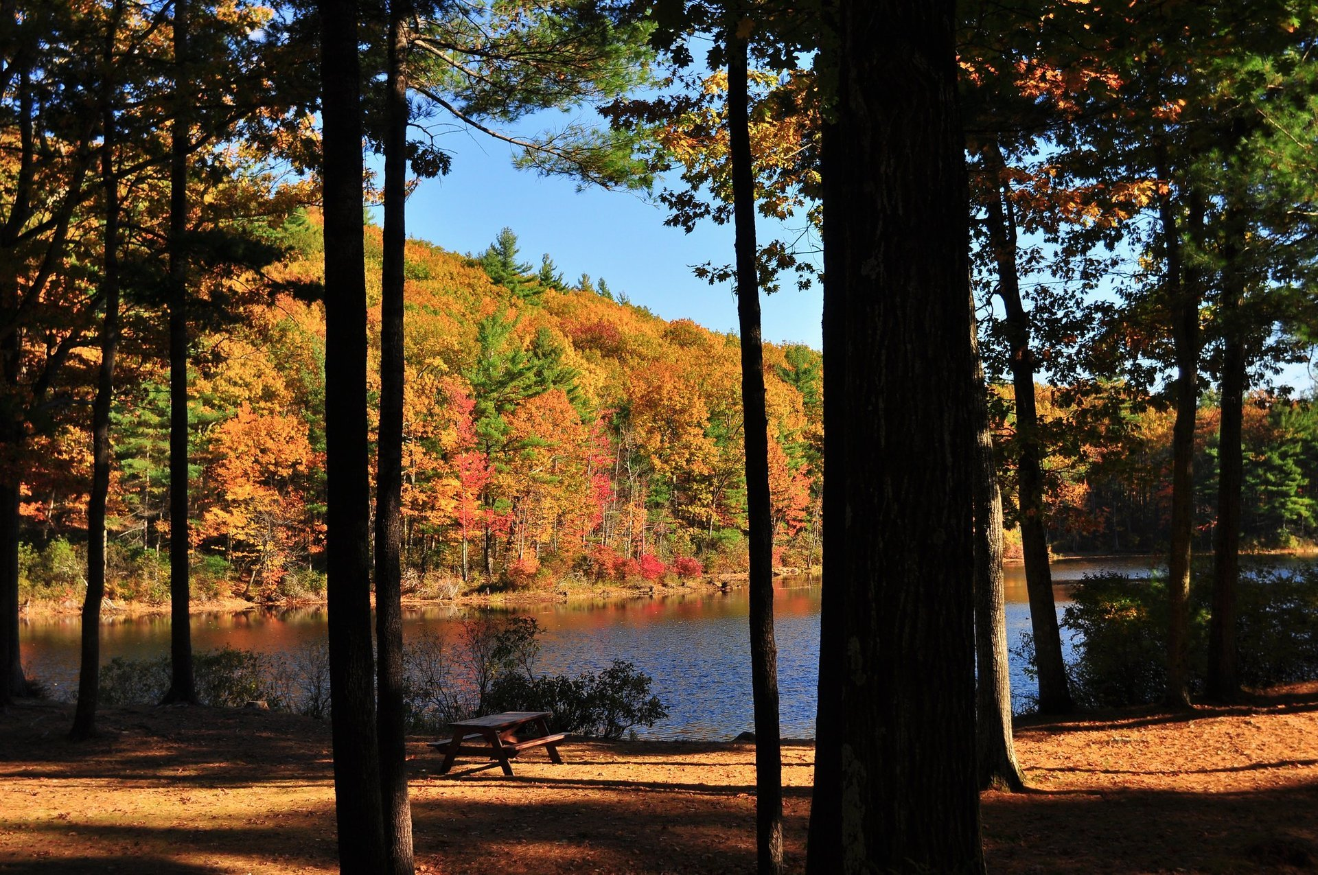 Leominster State Forest 2020