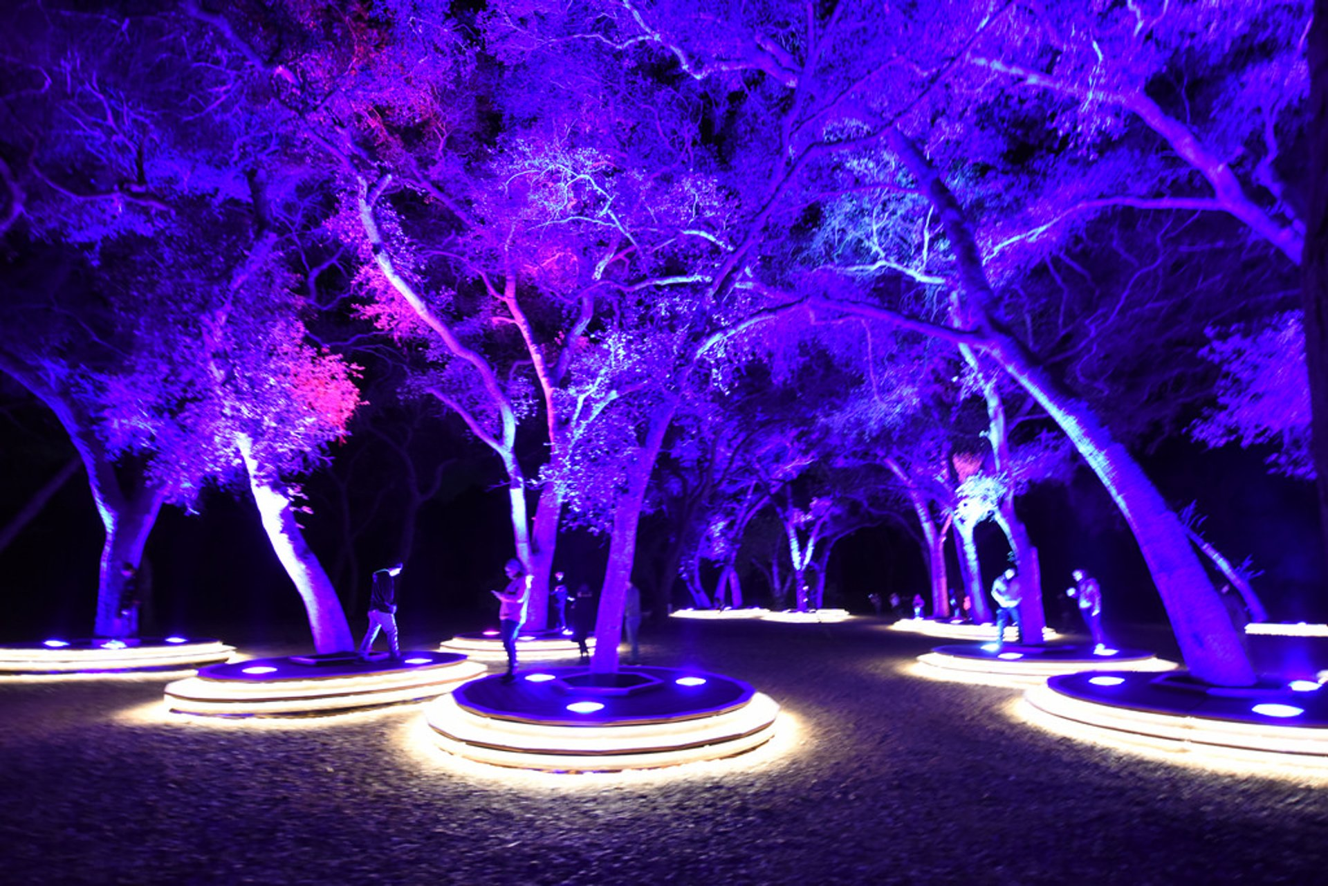 Best time to see Enchanted: Forest of Light in California