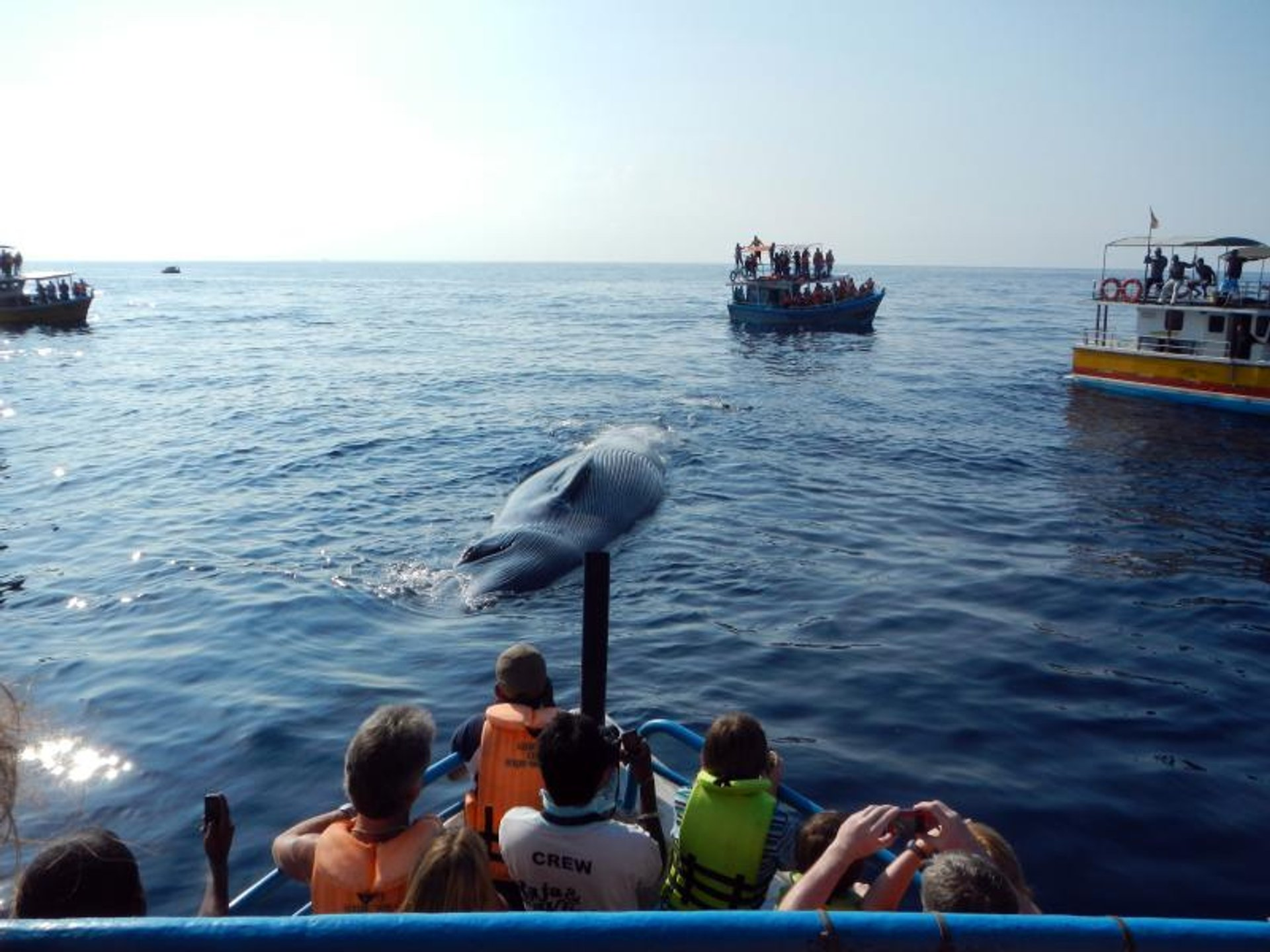 Whale Watching in Sri Lanka 2019 - Best Time
