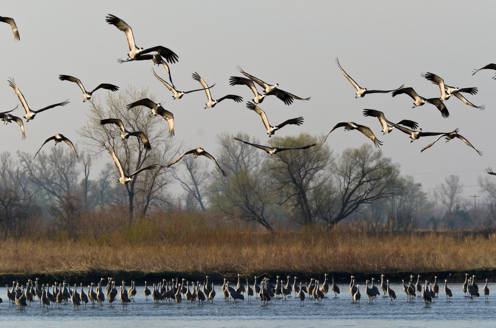 Sandhill Migration on the Platte River 2019