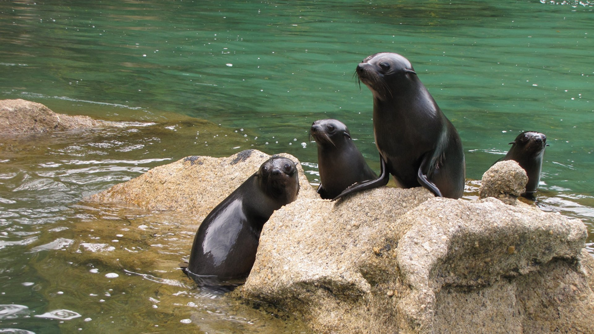 Best time to see Baby Fur Seals Watching in New Zealand 2020