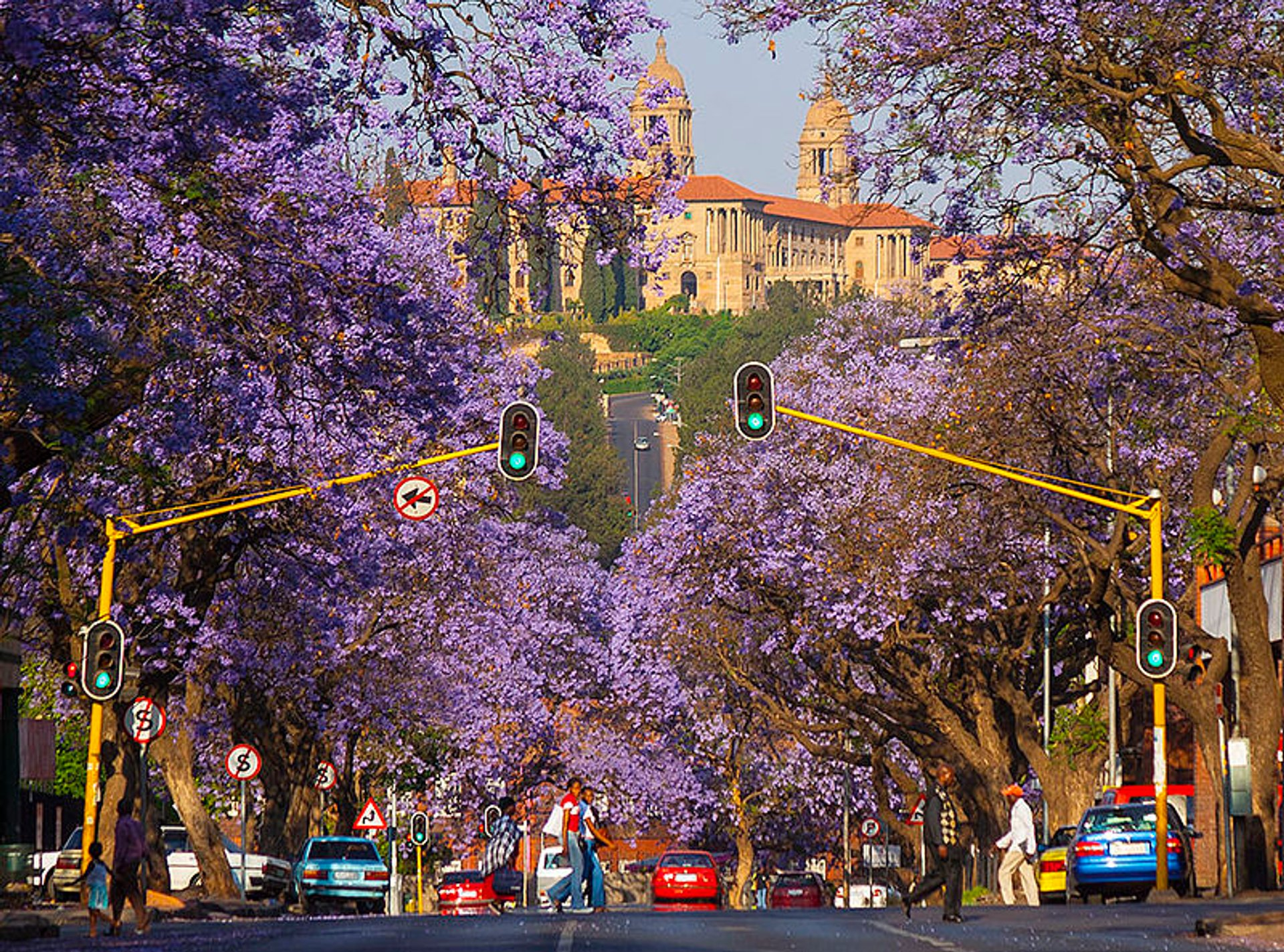 Jacarandas in Pretoria in South Africa - Best Season 2020