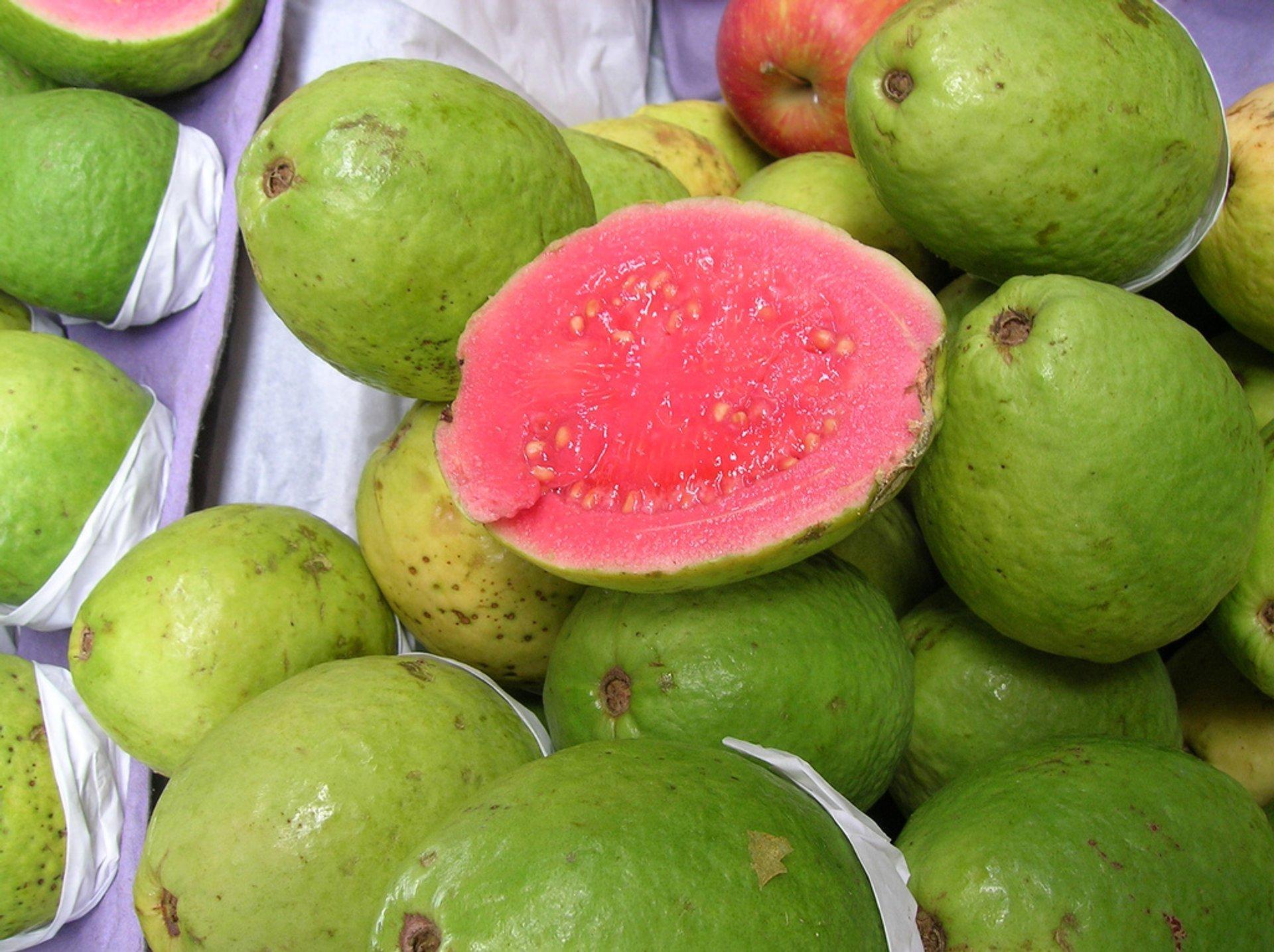 Guava or Goiaba in Rio de Janeiro - Best Season 2020