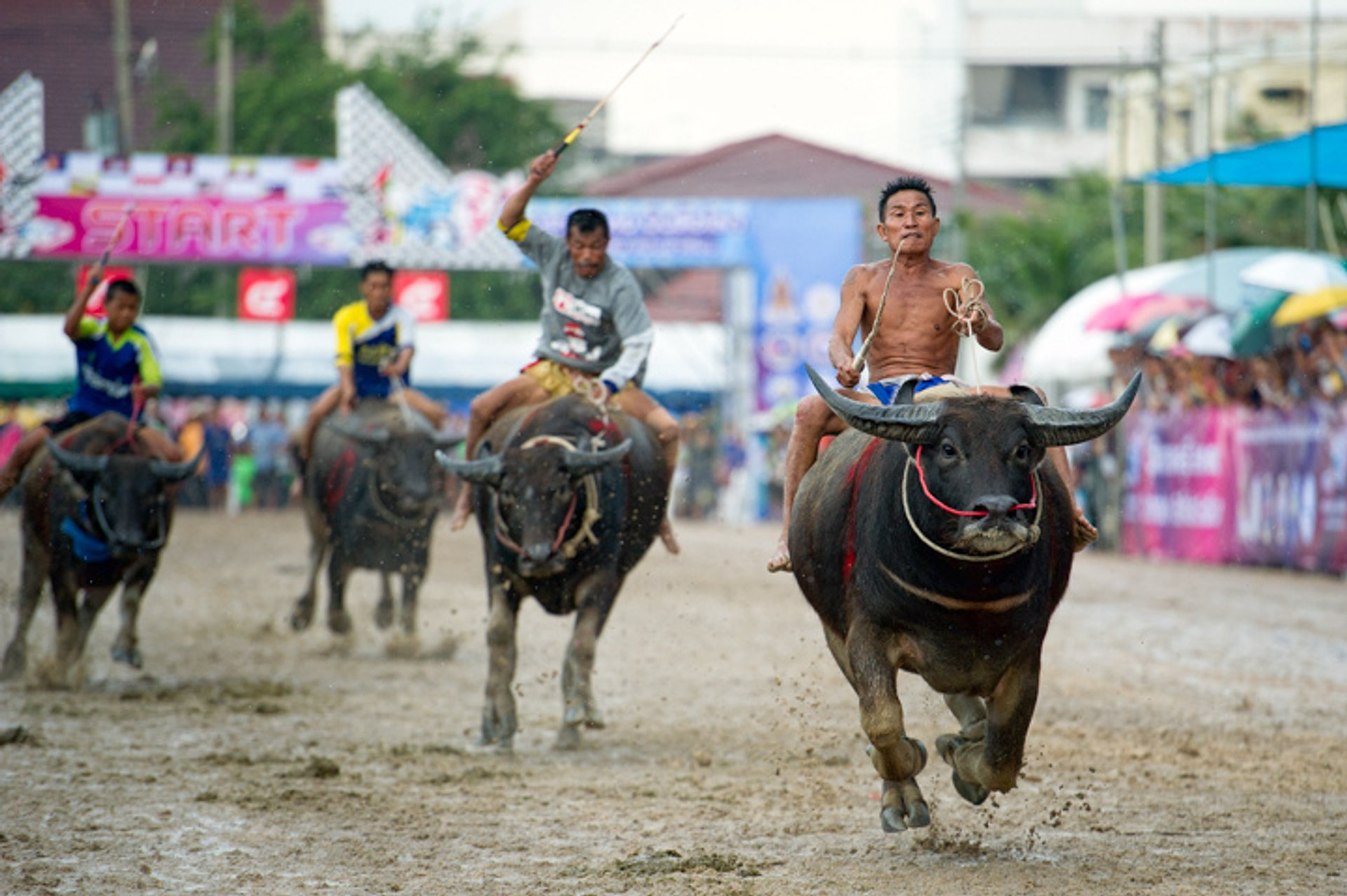 Chonburi Buffalo Racing in Thailand - Best Season
