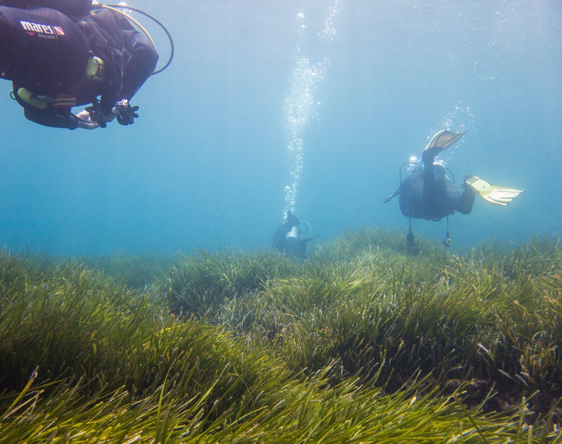 Scuba Diving in Mallorca in Mallorca - Best Season 2020
