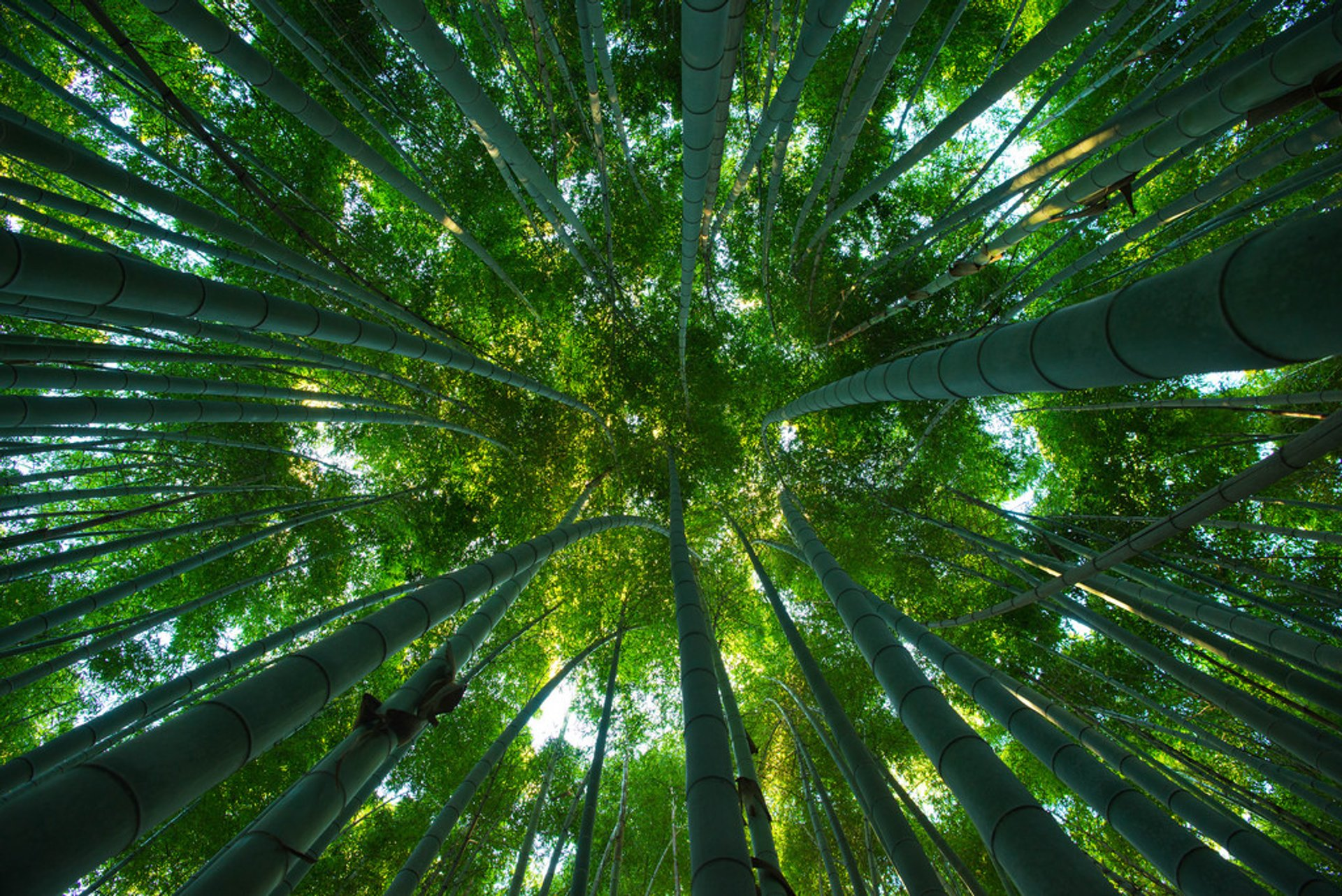 Sagano Bamboo Forest (Arashiyama) in Kyoto 2019 - Best Time