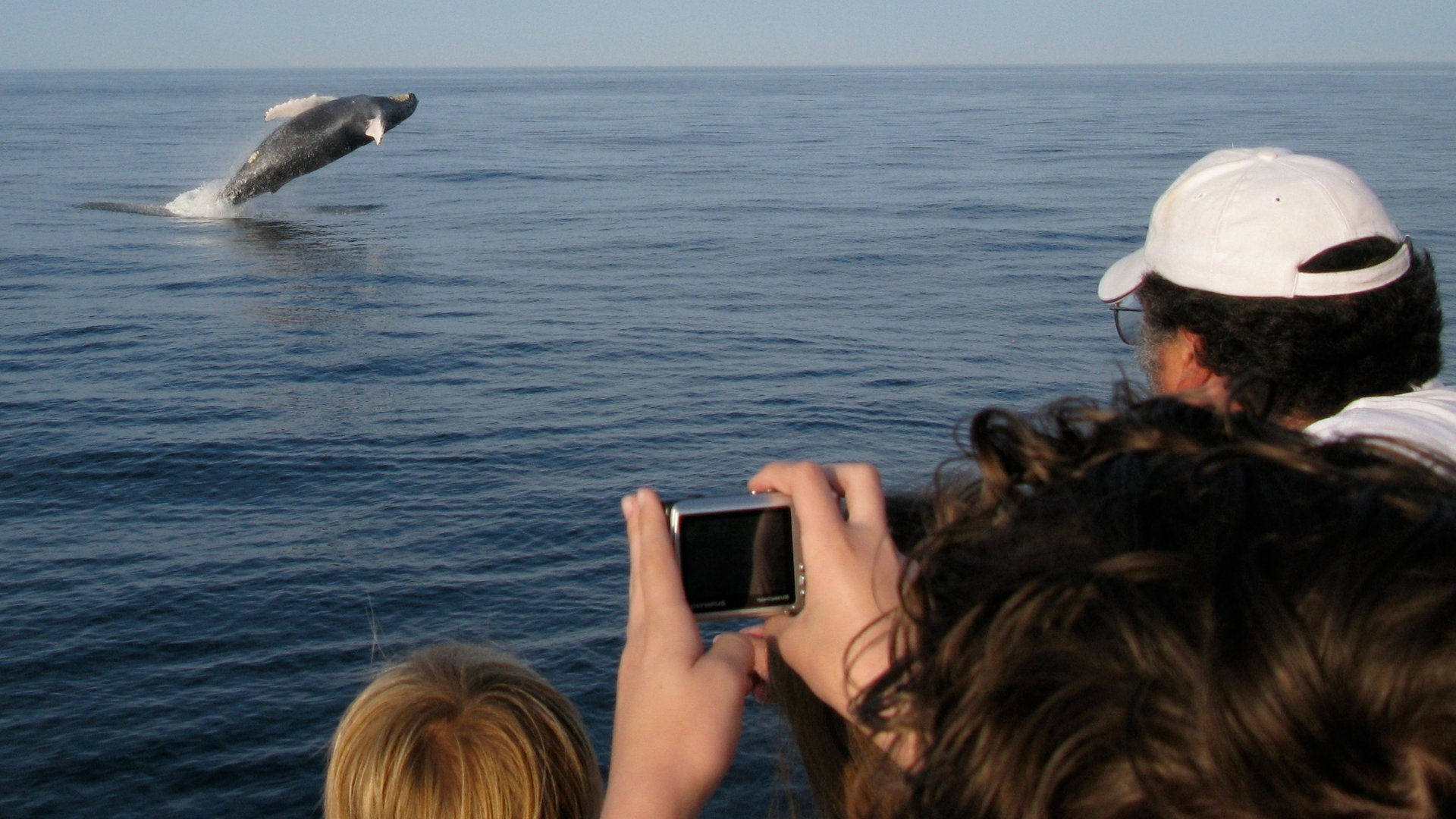Whale Watching in Maine - Best Season 2020