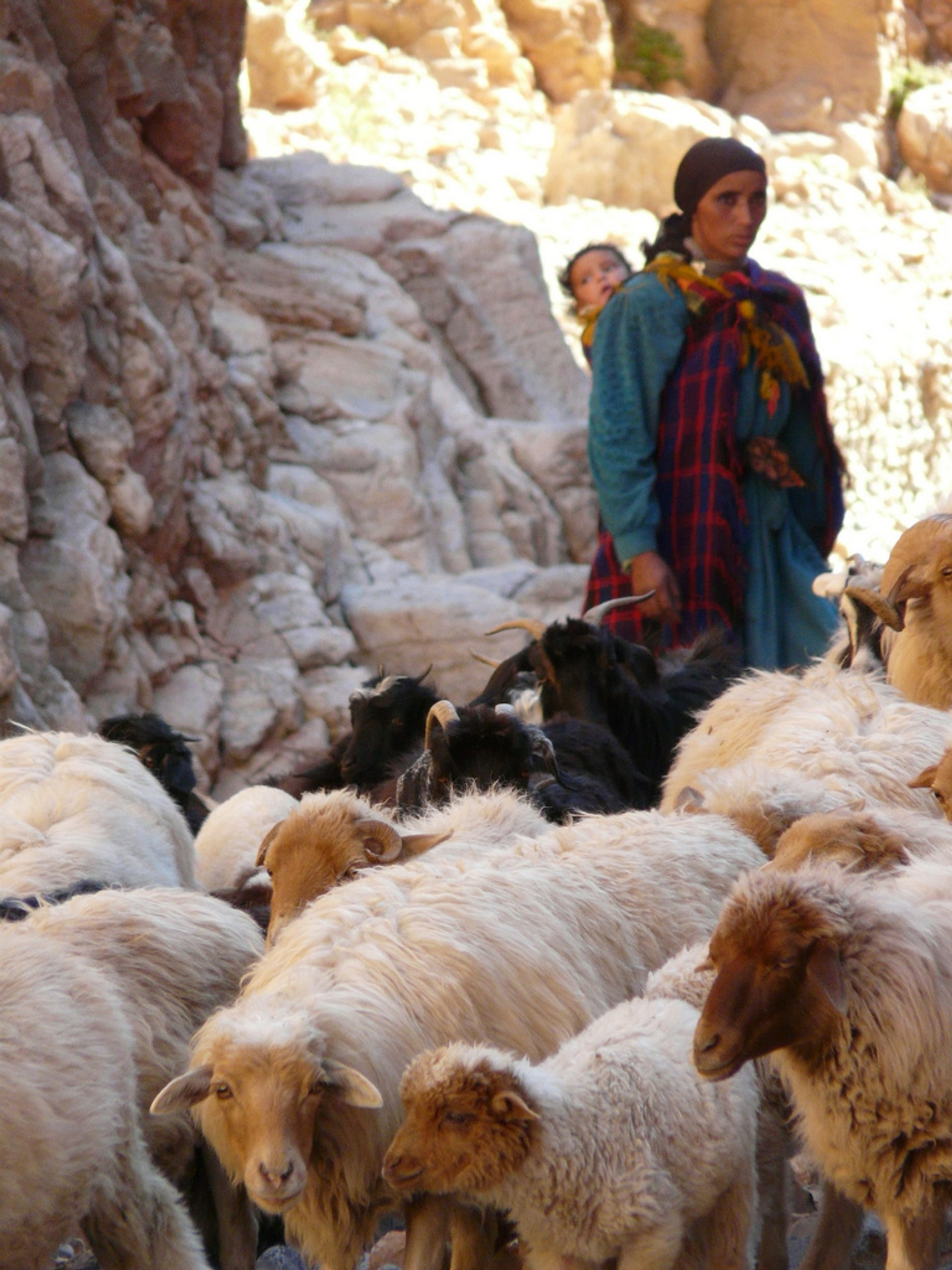Best time for Transhumance with Nomads in Morocco 2020