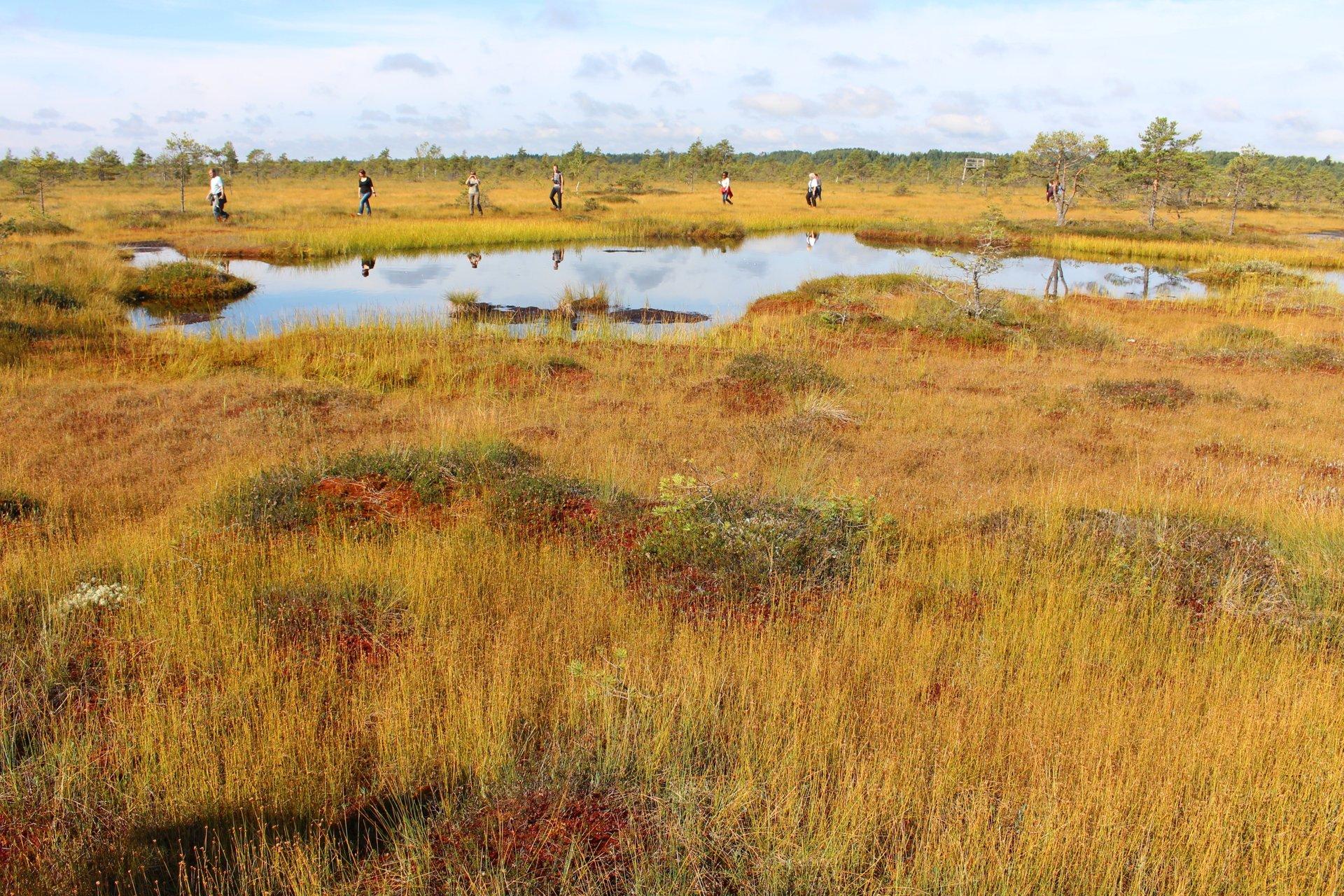 Bog landscape in Soomaa 2020
