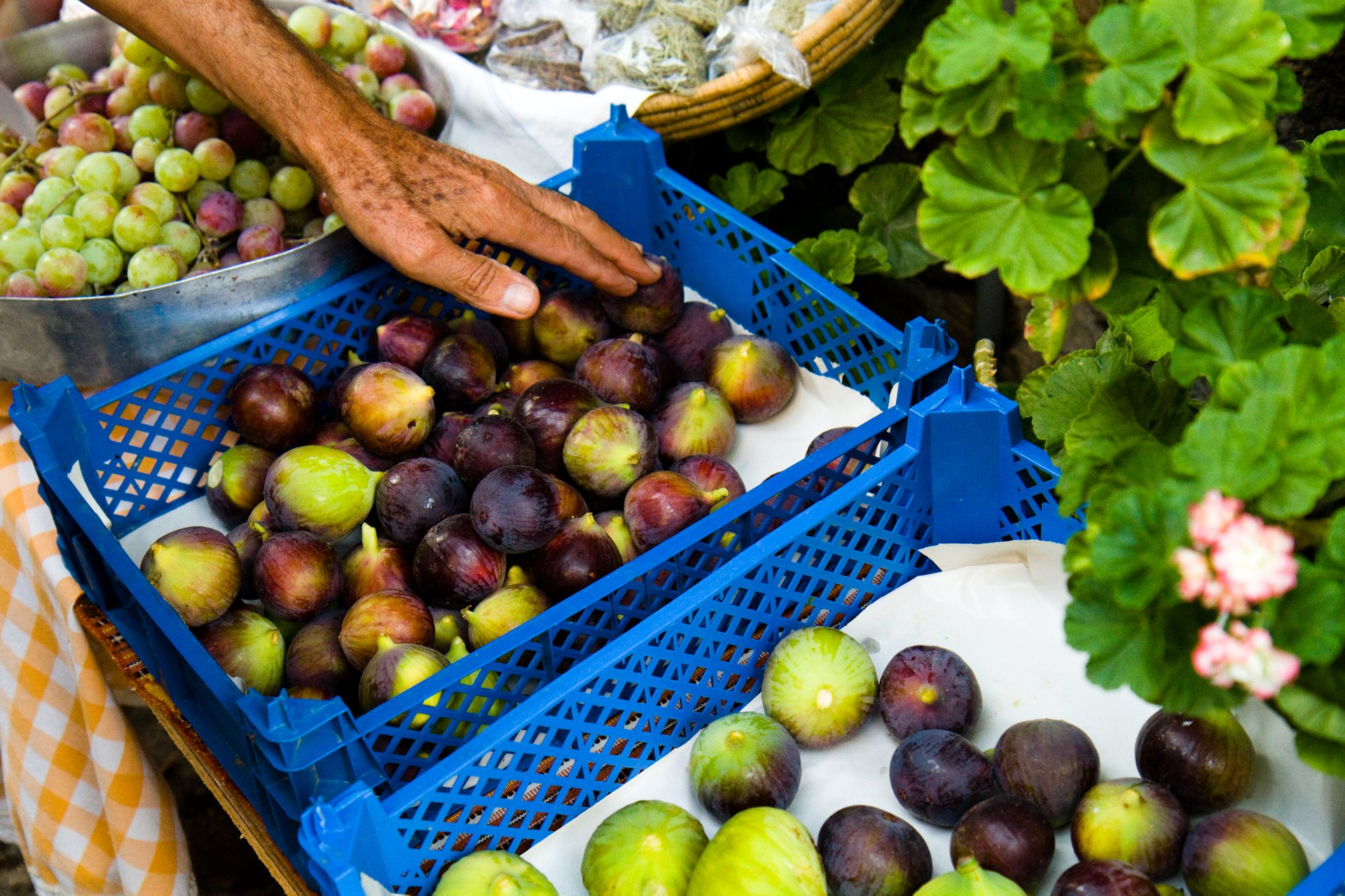 Best time for Figs in Cyprus 2020