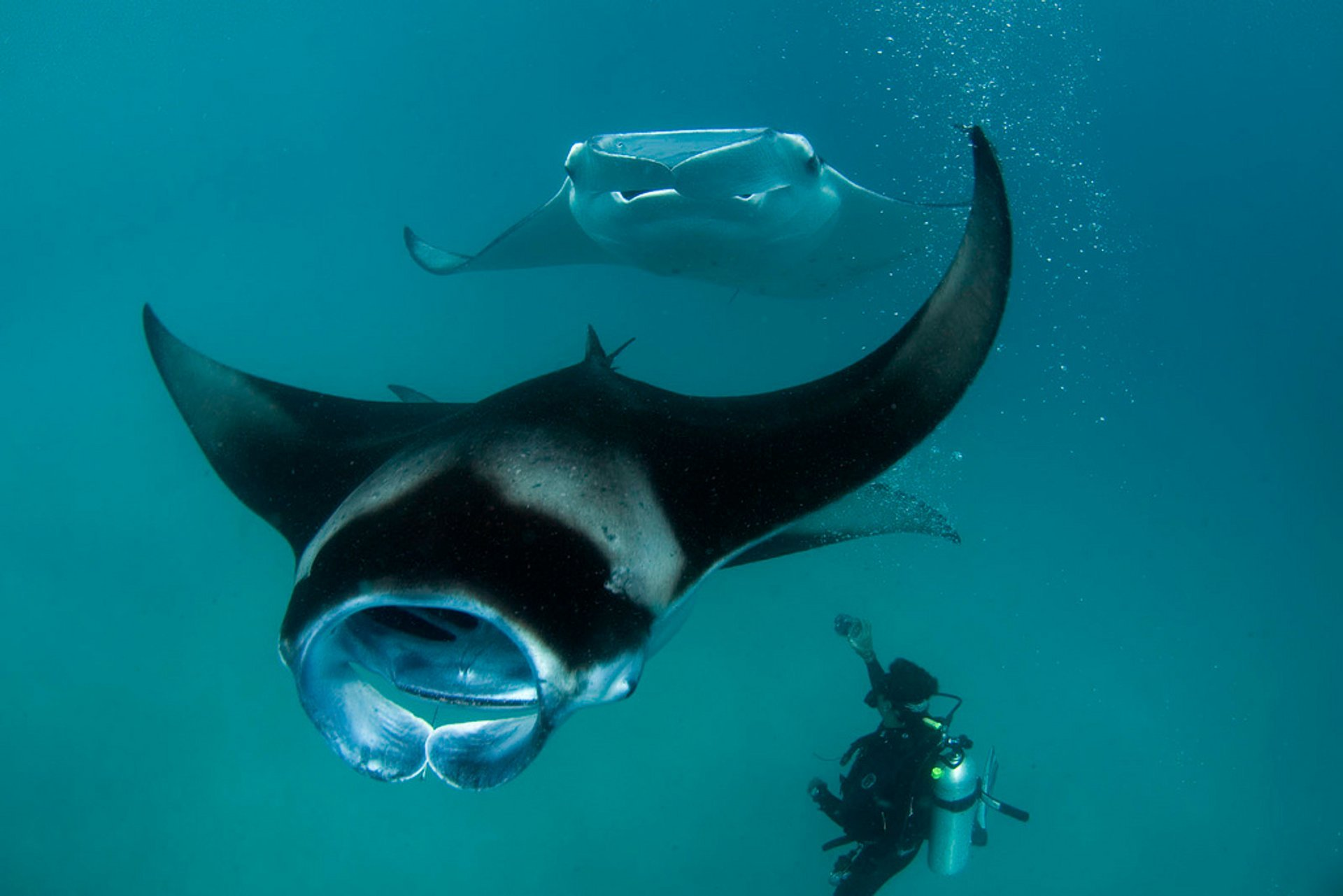 Two mantas in Hanifrau Bay 2020