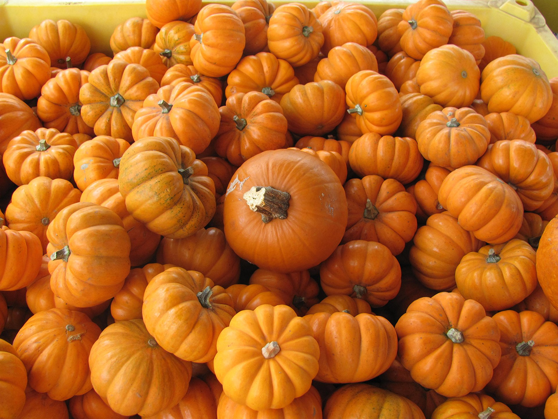 Bates Nut Farm Pumpkin Patch, Valley Center, California 2020