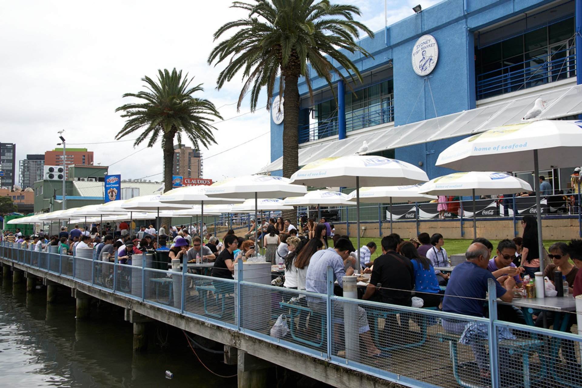Best time for Sydney Fish Market in Sydney 2019