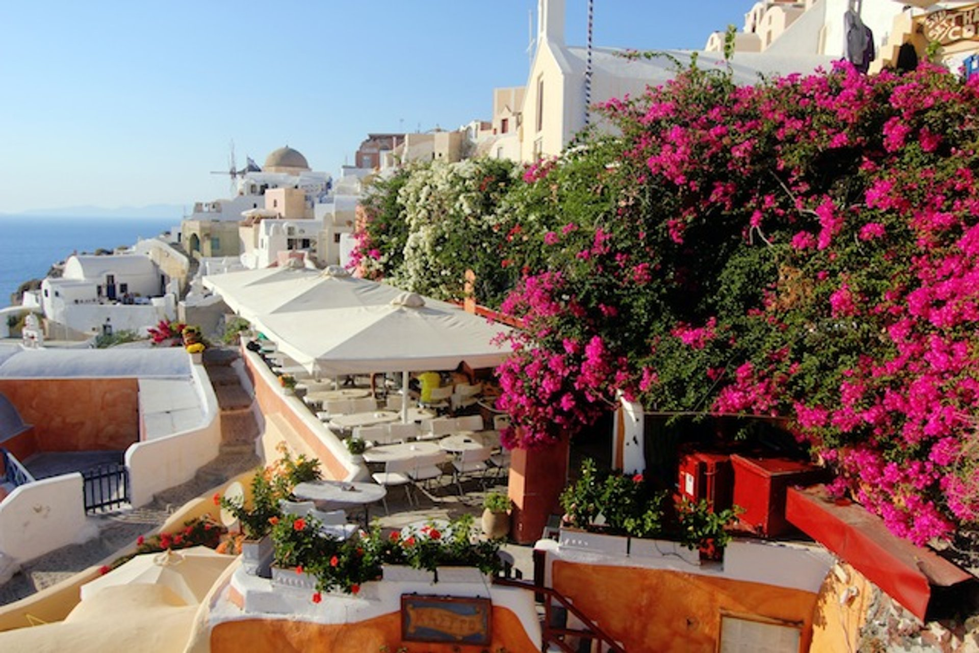 Fuchsia Bougainvillea Bloom in Santorini - Best Season 2019
