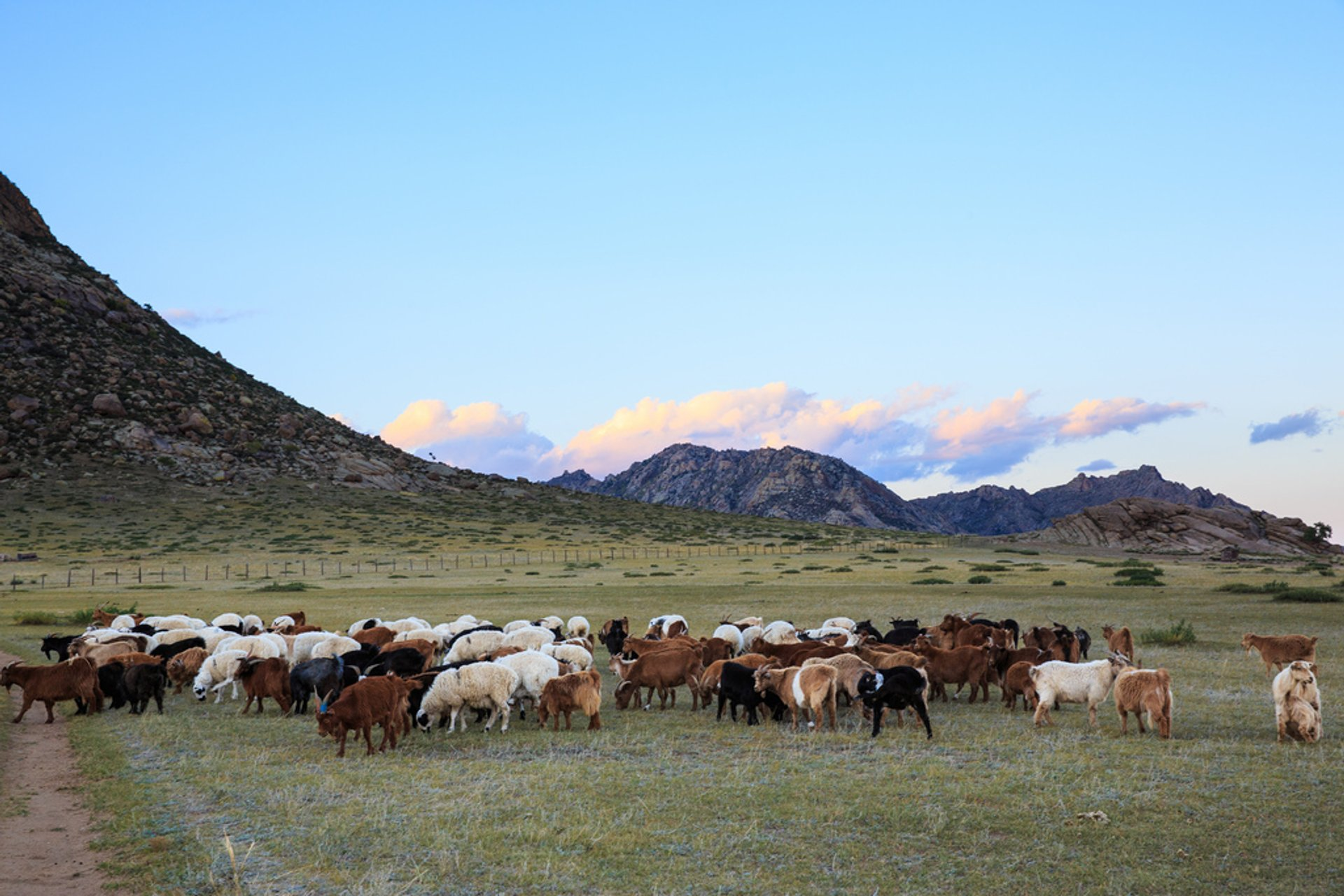 Wildlife Watching in Mongolia - Best Season 2019