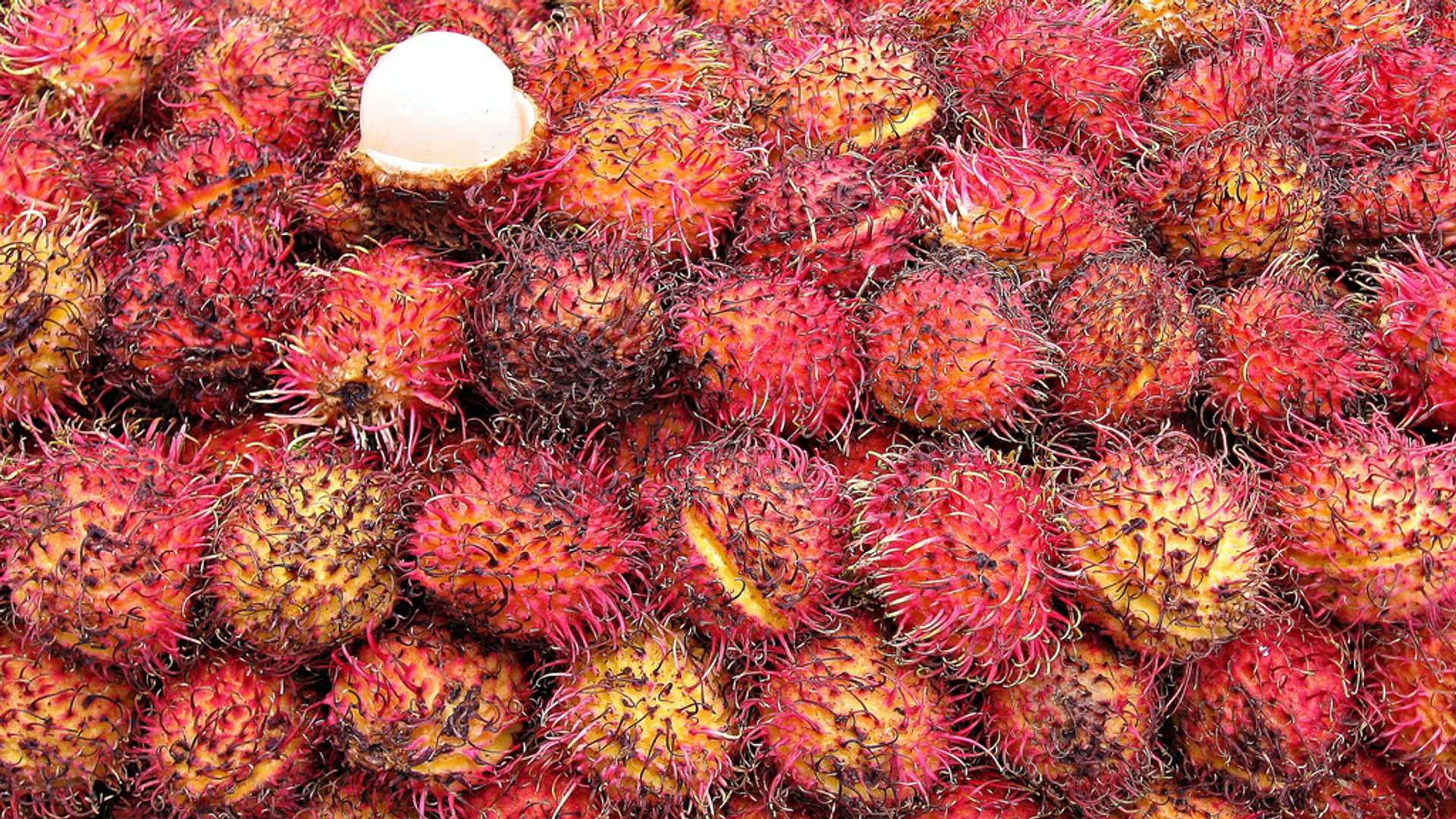 Rambutans in Mexico 2020 - Best Time