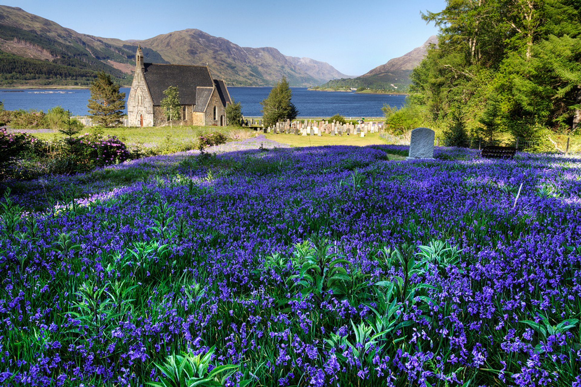 Blooming Bluebells in Scotland 2019 - Best Time