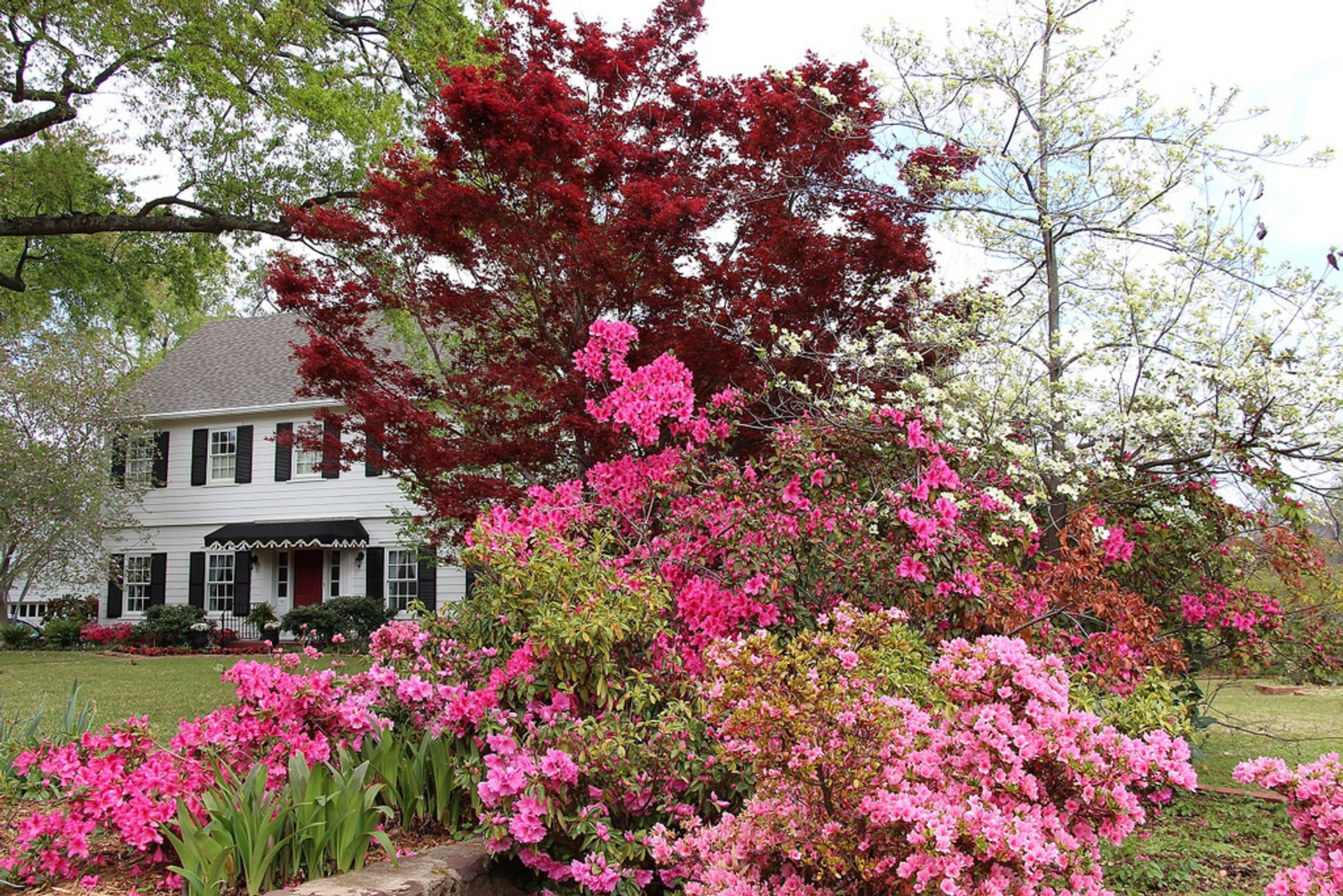 Best time for Azalea Bloom in Tyler in Texas 2019